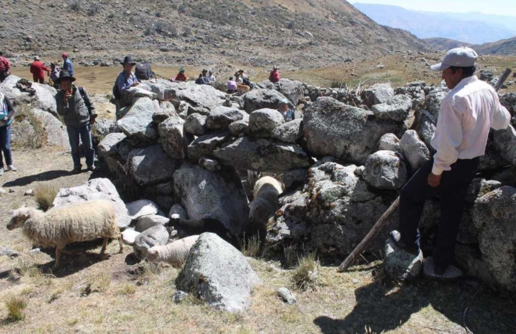 Parque Nacional Huascarán: Sernanp busca disminuir sobrepastoreo con monitoreo de ganado