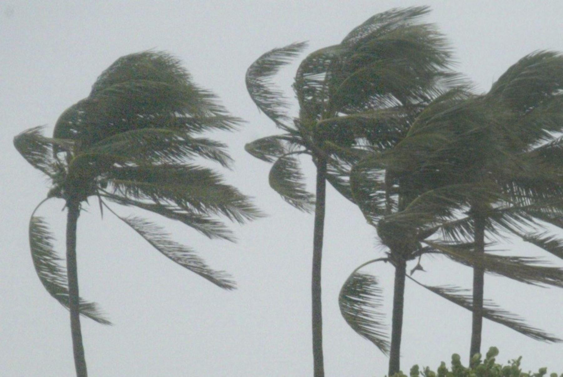 Desde este mediodía hasta el martes 2 de octubre se prevé el incremento del viento en la costa, desde Lima hasta Tacna. Los valores más intensos se registrarán mañana 1 de octubre en la costa central, con velocidades sobre los 20 kilómetros por hora en los distritos de Lima, y ráfagas superiores a los 50 kilómetros por hora en Ica. ANDINA/Difusión