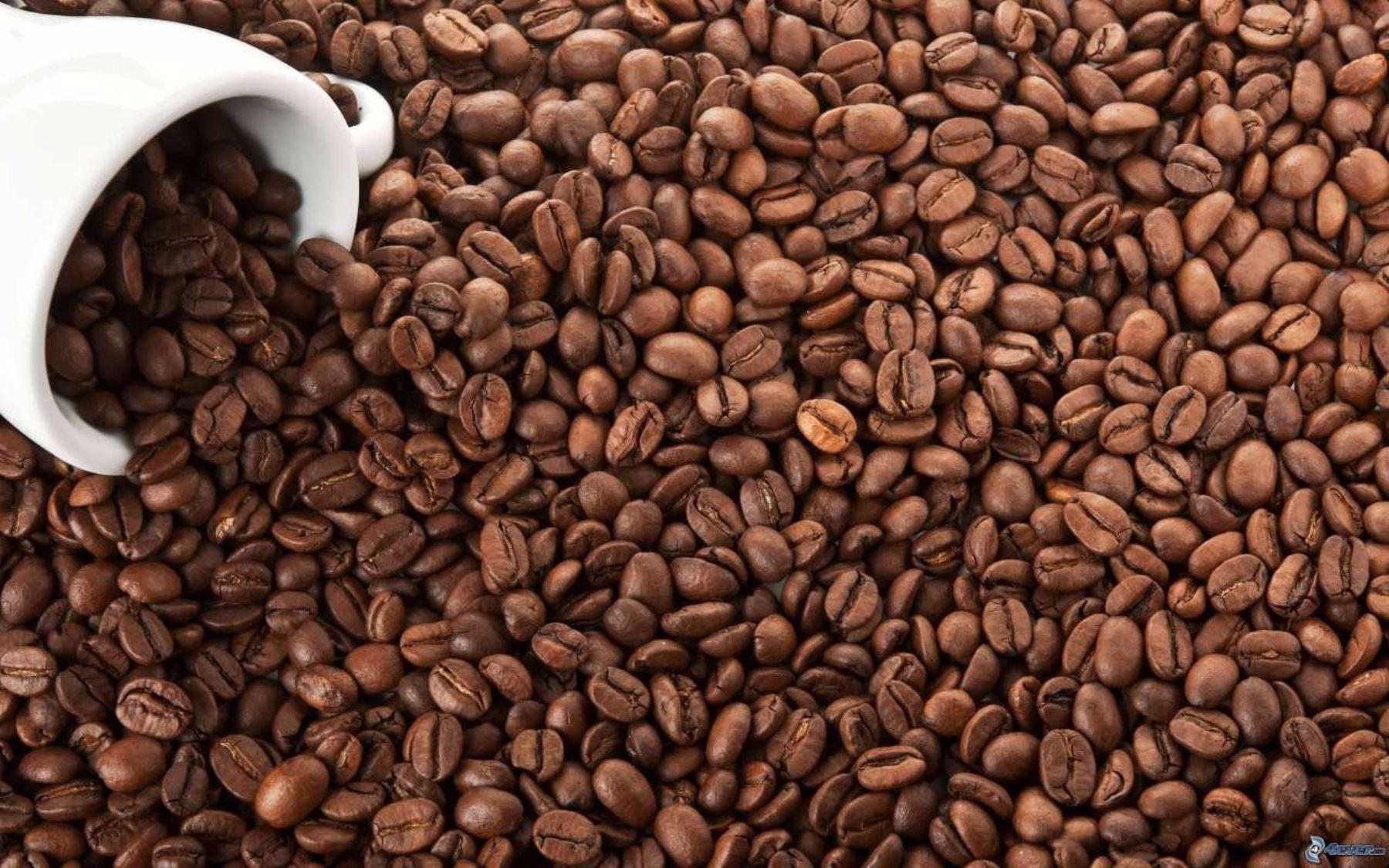 El café es uno de los cultivos emblemáticos de exportación de la región Cusco y se produce principalmente en la provincia de La Convención. ANDINA/Difusión