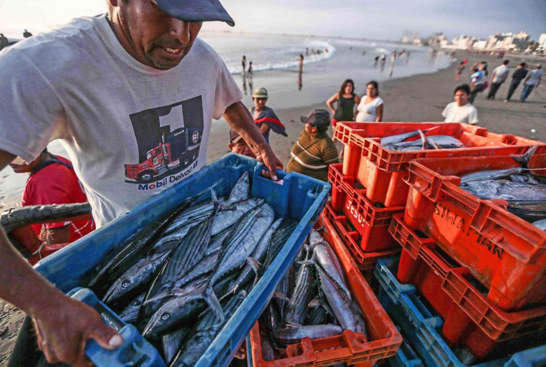 Pesca artesanal ANDINA/Difusión