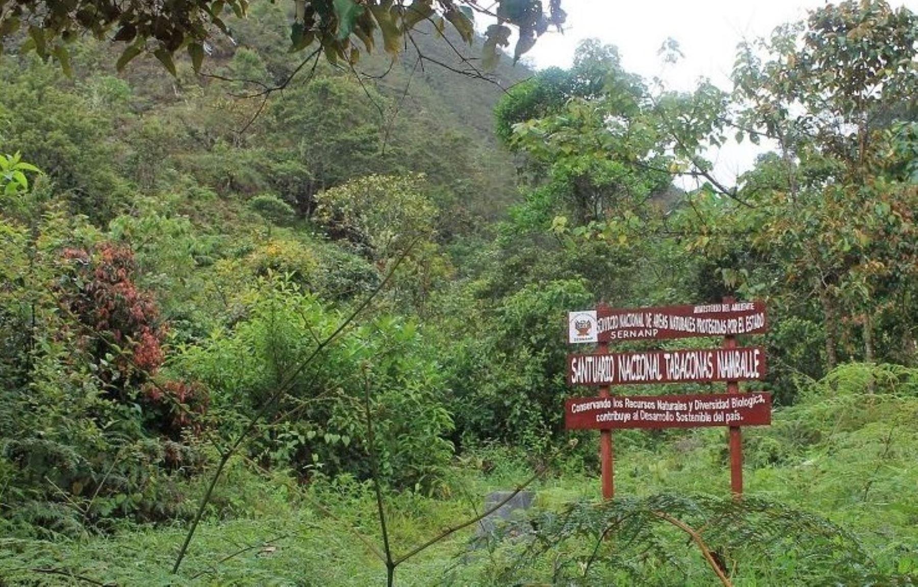 El Santuario Nacional Tabaconas Namballe está localizado en los distritos de Tabaconas y Namballe, en la provincia de San Ignacio, departamento de Cajamarca. Su extensión es de 32,124.87 hectáreas y conserva un ecosistema único y poco frecuente en el Perú: el páramo.