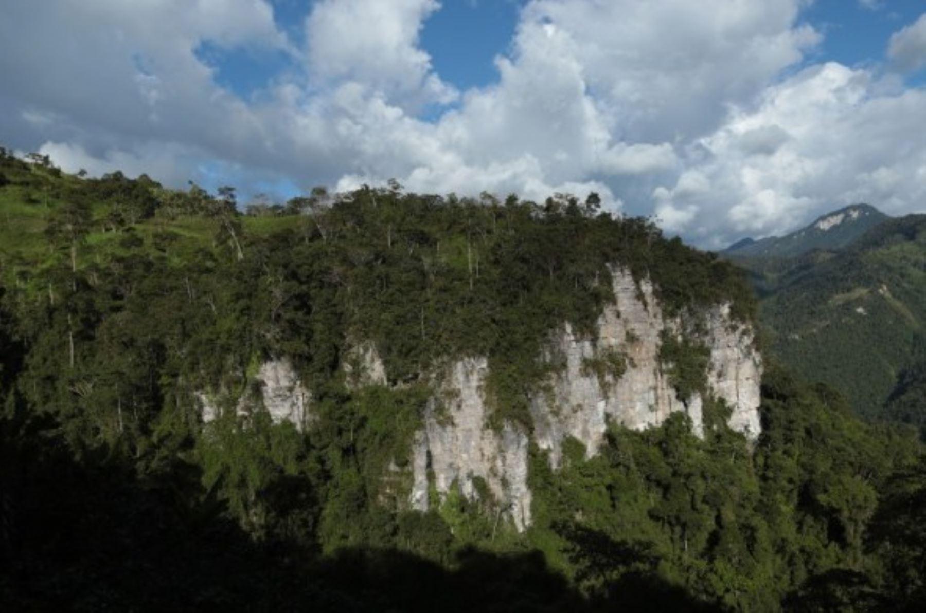 El Santuario Nacional Cordillera de Colán está ubicado en los distritos de Aramango y Copalín, en la provincia de Bagua, y en el distrito de Cajaruro, en la provincia de Utcubamba, ambas provincias pertenecientes al departamento de Amazonas. Tiene una extensión de 39,215.80 hectáreas y comprende una muestra de los bosques montanos o yungas del norte del Perú.