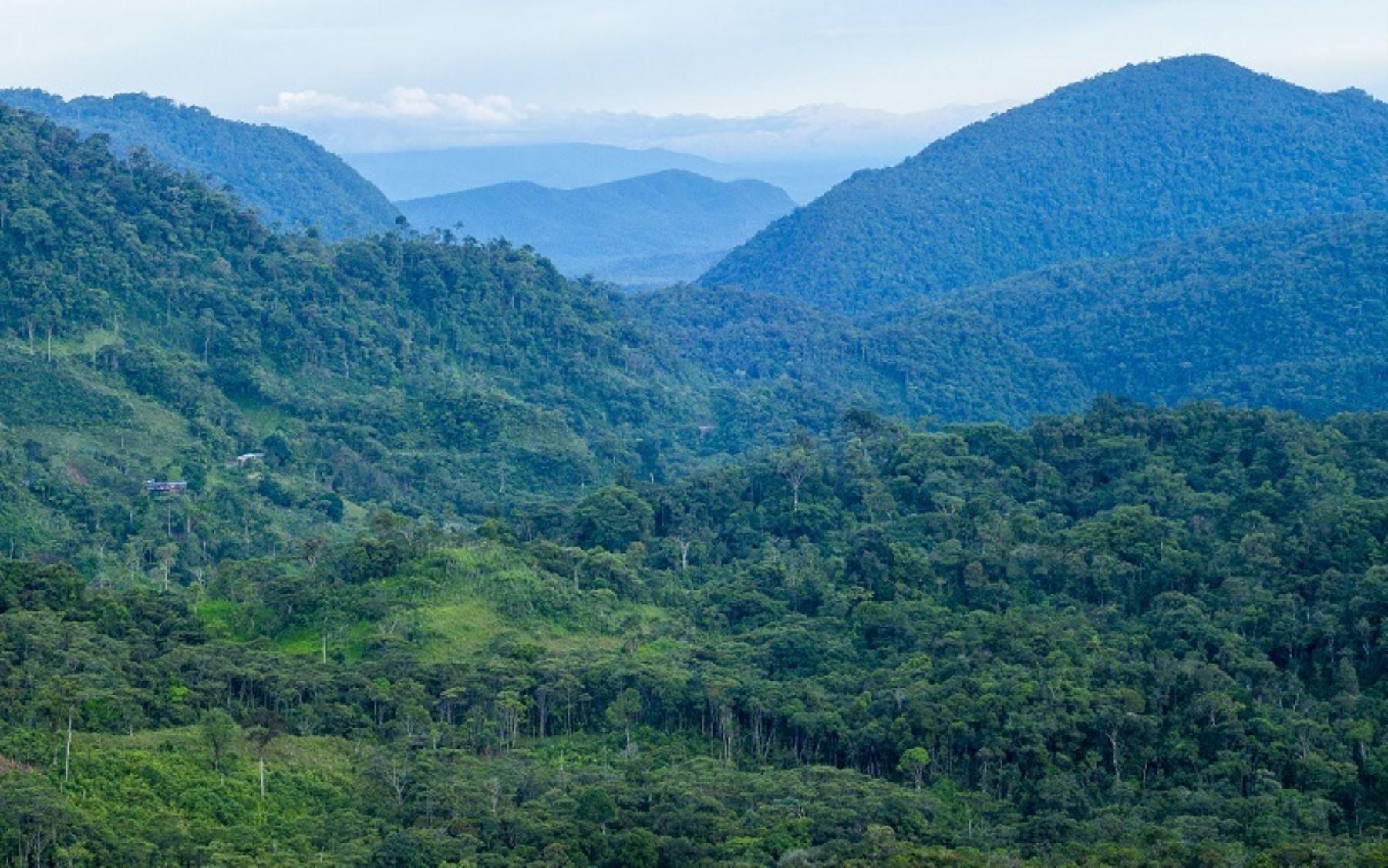 El Bosque de Protección Alto Mayo comprende los territorios de las provincias de Rioja y Moyobamba en el departamento de San Martín. Su extensión es de 182,000 hectáreas.