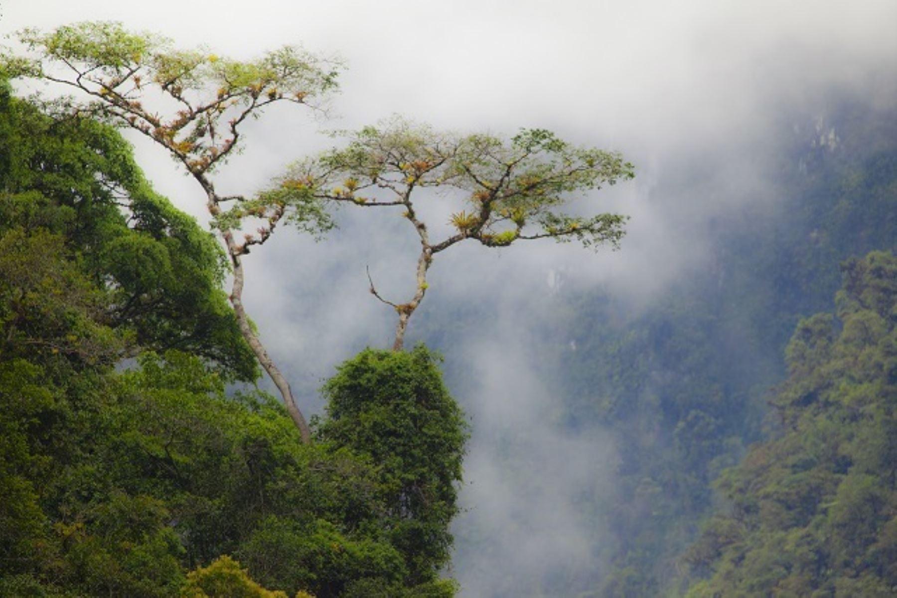 La Reserva Comunal Chayu Nain está ubicada en los distritos de Aramango e Imasa, en la provincia de Bagua y en el distrito de Cajaruro, provincia de Utcubamba, departamento de Amazonas. Su extensión es de 23,597.76 hectáreas y comprende una muestra de los bosques montanos o yungas del norte del Perú.