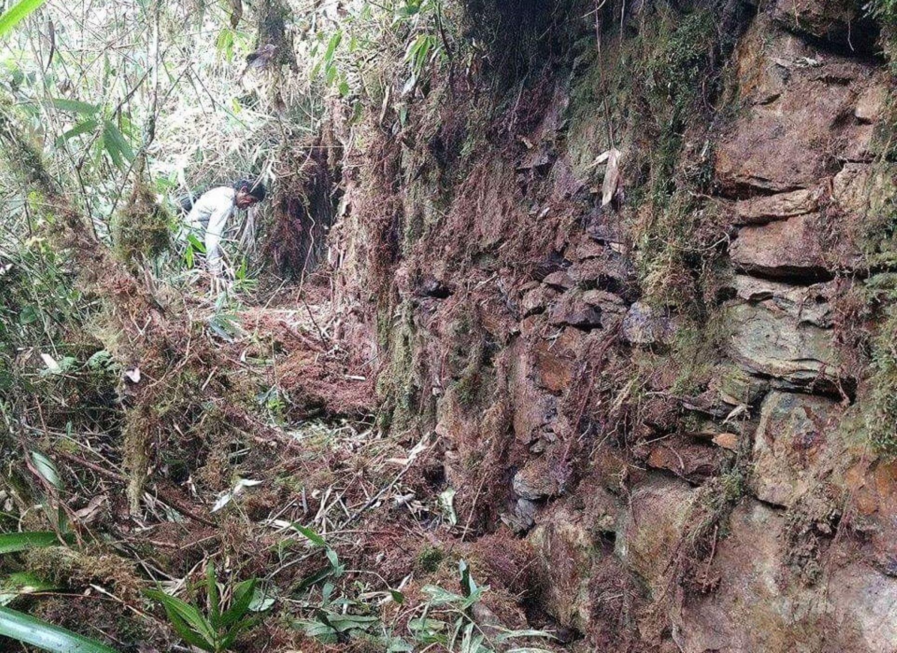 Hallan restos de ciudadela Inca en el límite de Calca y La Convención, en Cusco. Foto: Cortesía/Municipalidad de La Convención