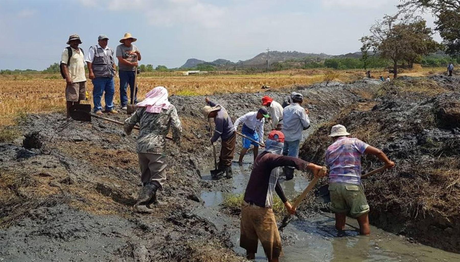 Más de 3,000 piuranos ya trabajan en el encauzamiento y limpieza de los ríos Chira y Piura, que tiene por objetivo prevenir desbordes ante la próxima temporada de lluvias, informó el Ministerio de Agricultura y Riego (Minagri).