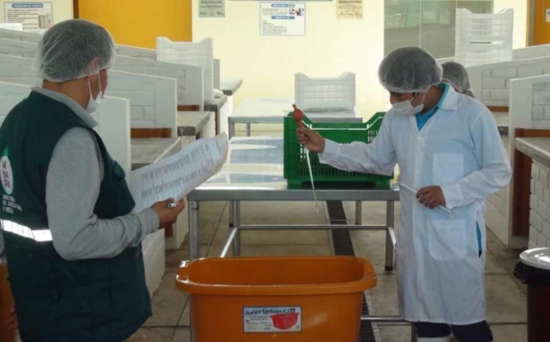 """La Asociación de Productores Agroecológicos """"Ayllu Kushisha"""" inauguró la primera planta de procesamiento primario de hortalizas en el distrito de Pucará, provincia de Huancayo, región Junín, la cual obtuvo la autorización del Servicio Nacional de Sanidad Agraria (Senasa)."""