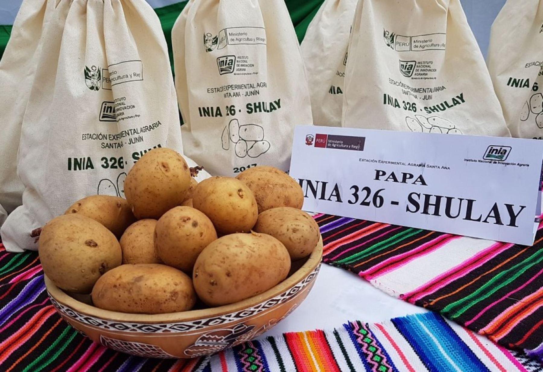 El Ministerio de Agricultura y Riego (Minagri), a través del Instituto Nacional de Innovación Agraria (INIA), puso a disposición de los agricultores del país una nueva variedad de papa denominada INIA 326-Shulay, especial para hacer papas fritas.