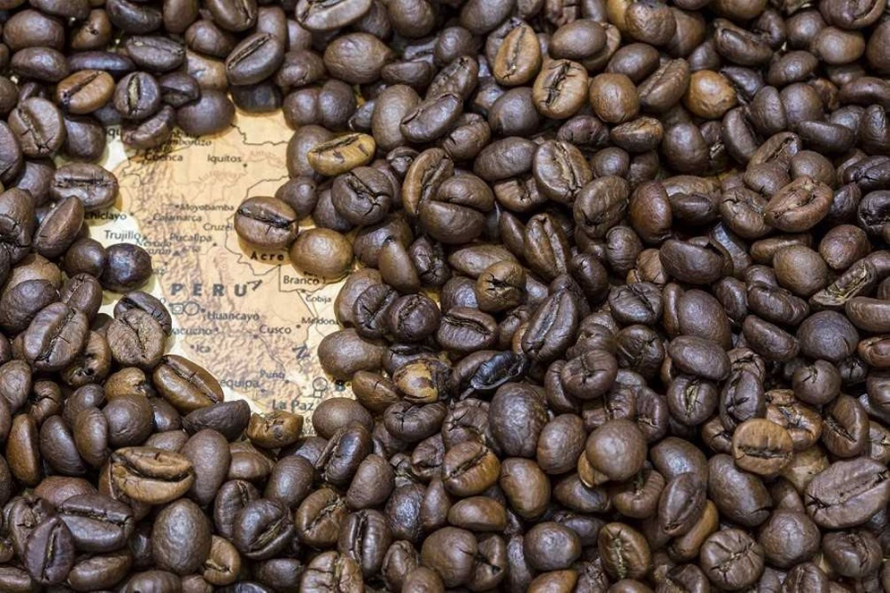 En el Perú, el café se produce en 210 distritos rurales ubicados en 47 provincias de 10 departamentos. La superficie cultivada con café ocupa 230,000 hectáreas distribuidas en tres zonas, siendo la región más apropiada para obtener los mejores rendimientos con alta calidad la que se ubica en la zona de la selva, bajo una ecología tropical. ANDINA/Difusión