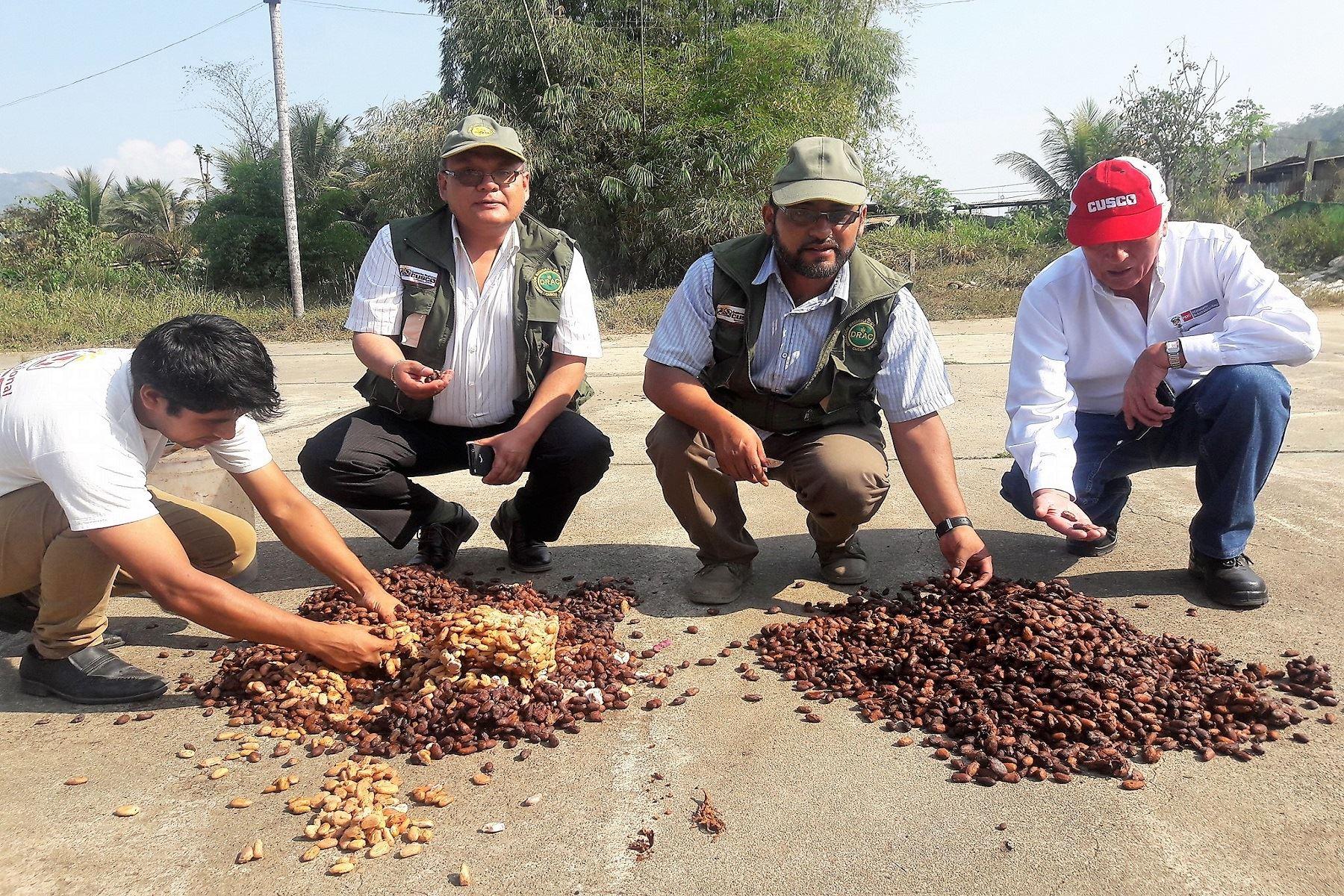 Ingresos por exportaciones de café superan los US$ 25 millones al año. ANDINA/Percy Hurtado