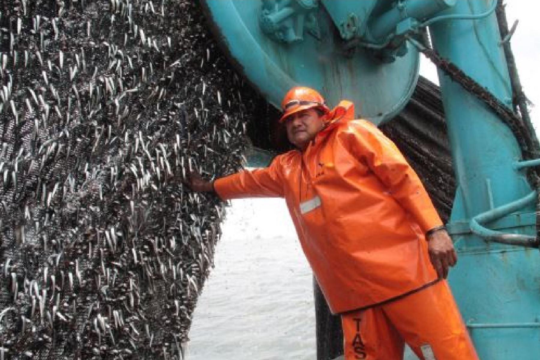 Pesca de anchoveta. Foto: ANDINA
