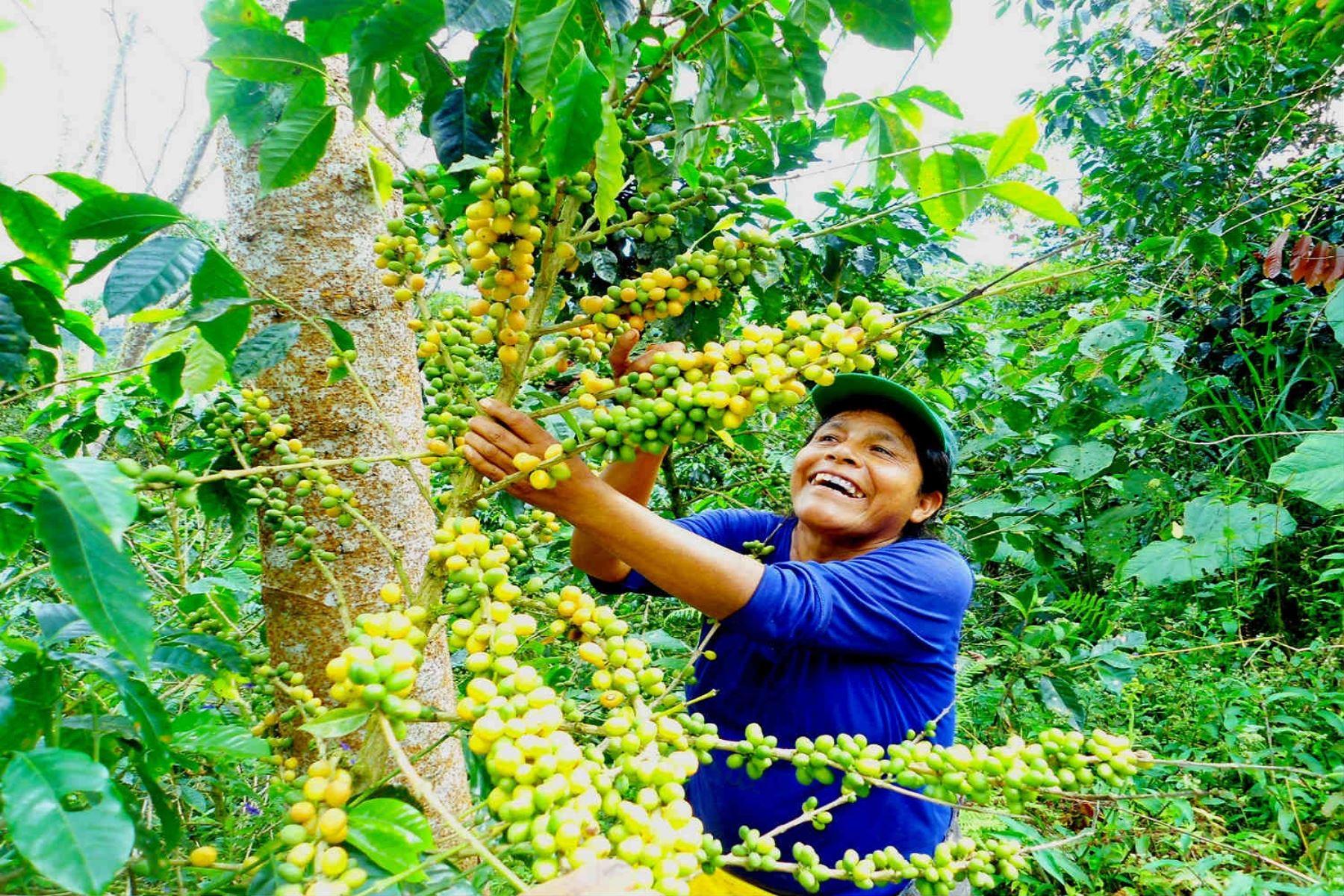 Repunte del sector agrario. ANDINA/Difusión