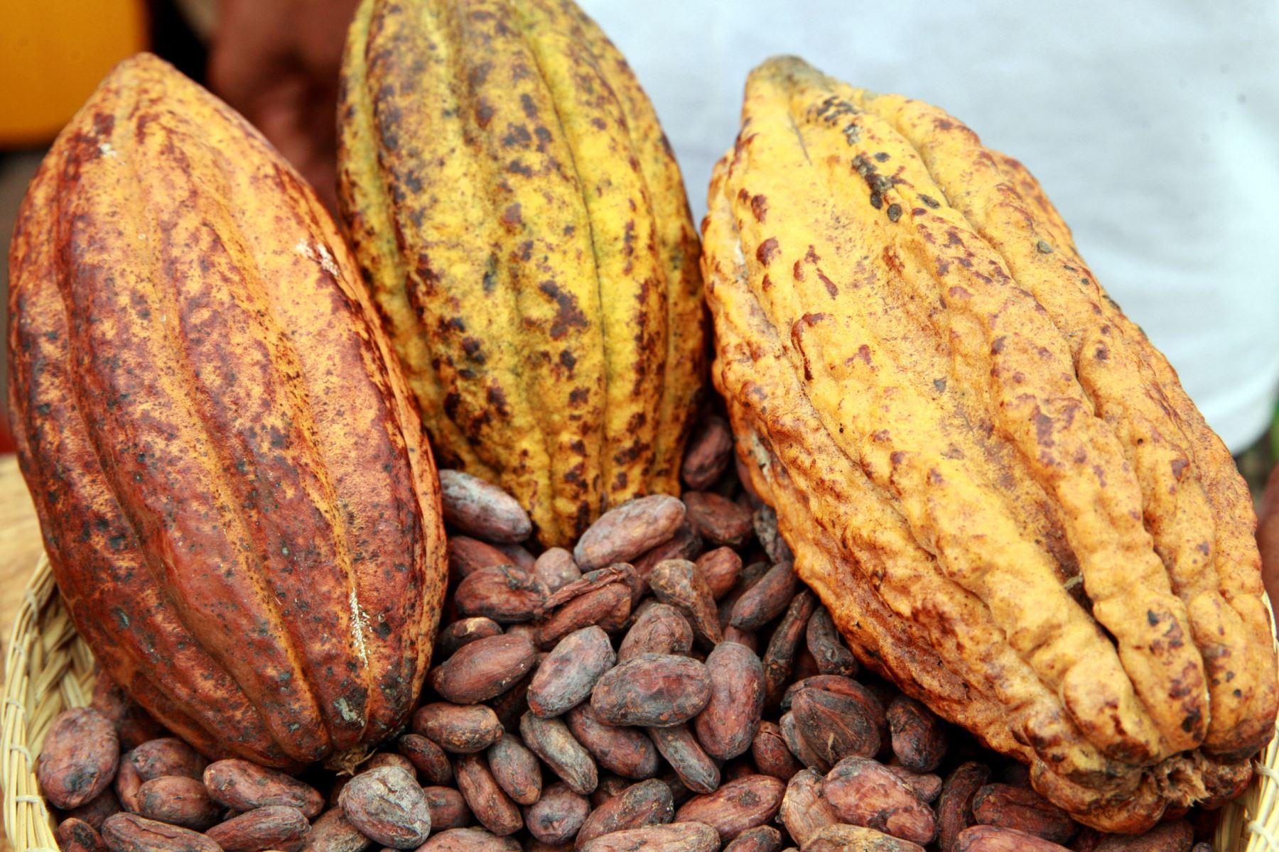 San Martín: presentan alternativas para reducir concentración de cadmio en el cacao que se cultiva en esa región amazónica peruana.Foto: ANDINA/Dante Zegarra