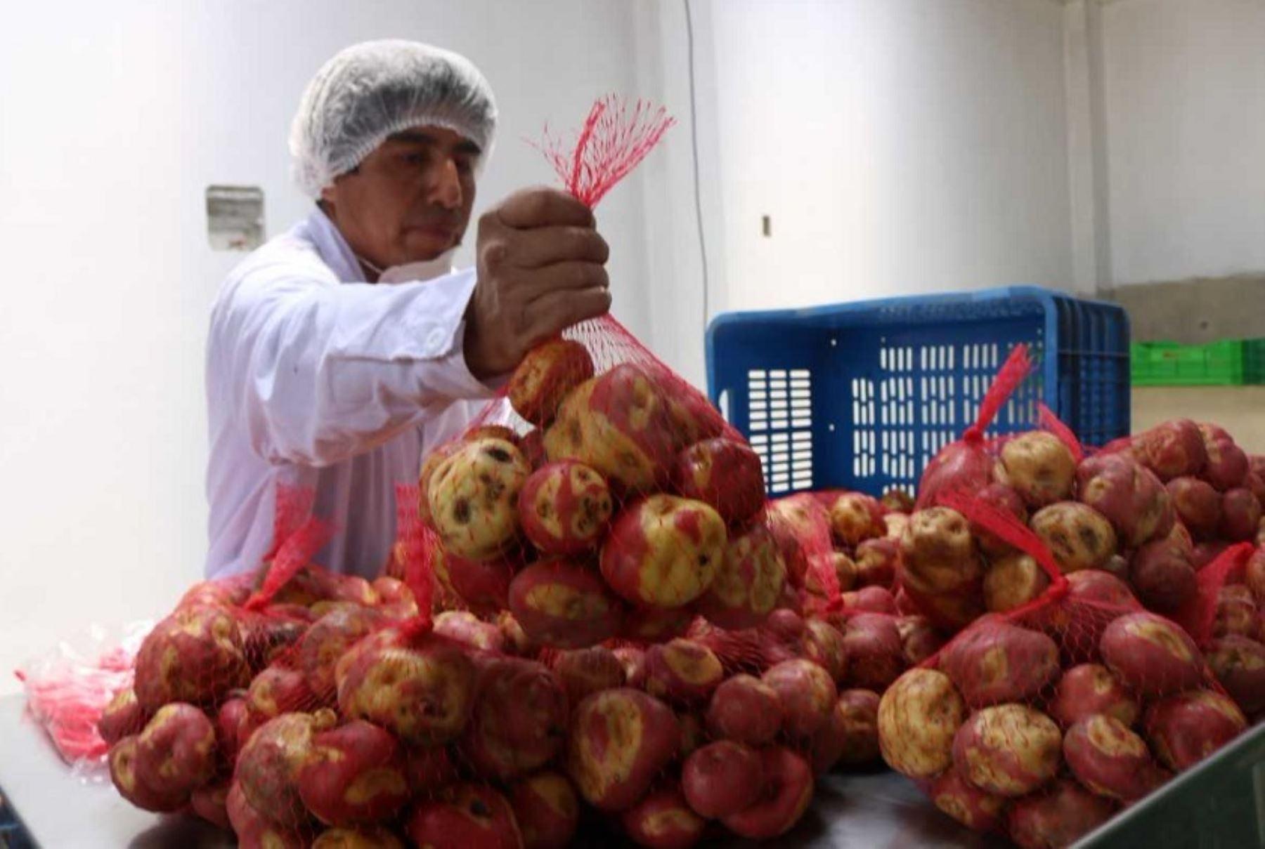 El Centro de Innovación Tecnológica (CITE) Papa y otros Cultivos Andinos presentó su plataforma de trabajo en la ciudad de Cajamarca, donde realizará una amplia labor en el desarrollo de innovaciones técnicas y productivas en una región que cuenta con terrenos y altitud propicios para los cultivos nativos.