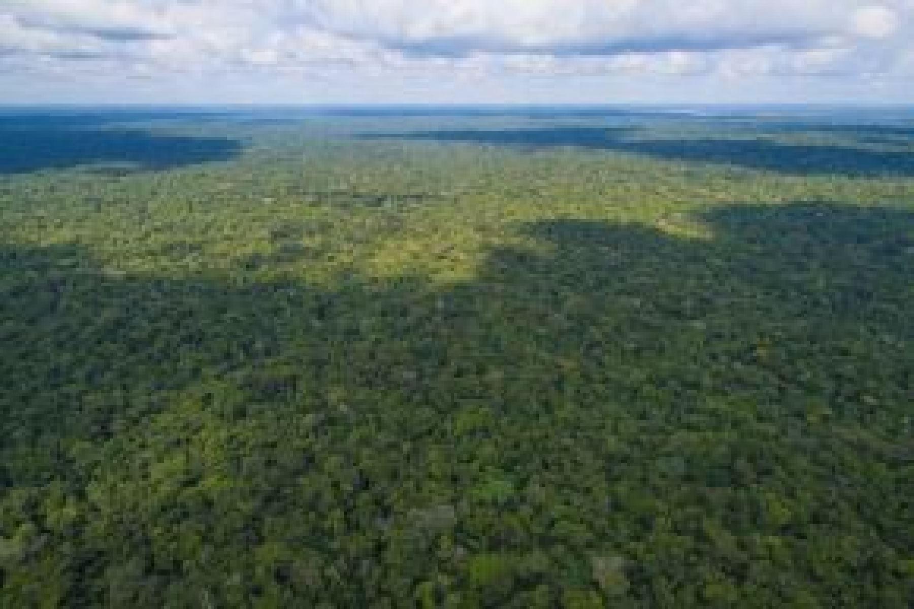 El distrito de Masisea, en la región Ucayali, será sede del Primer Encuentro de Embajadores y Ministros en la Amazonia por el Cambio Climático (EEMACC), a realizarse el próximo 12 de Octubre, para definir acciones prioritarias y enfrentar los retos que demanda este tema en todo el mundo y la defensa del medio ambiente.  ANDINA/Difusión