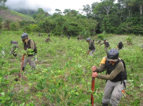 Un total de 16,045.83 hectáreas de plantaciones ilegales de hoja de coca fueron erradicadas, desde el mes de febrero hasta la fecha, por el Proyecto Especial de Control y Reducción de Cultivos Ilegales en el Alto Huallaga (Corah) con el apoyo de la Policía Nacional del Perú (PNP).Foto:  ANDINA/Difusión