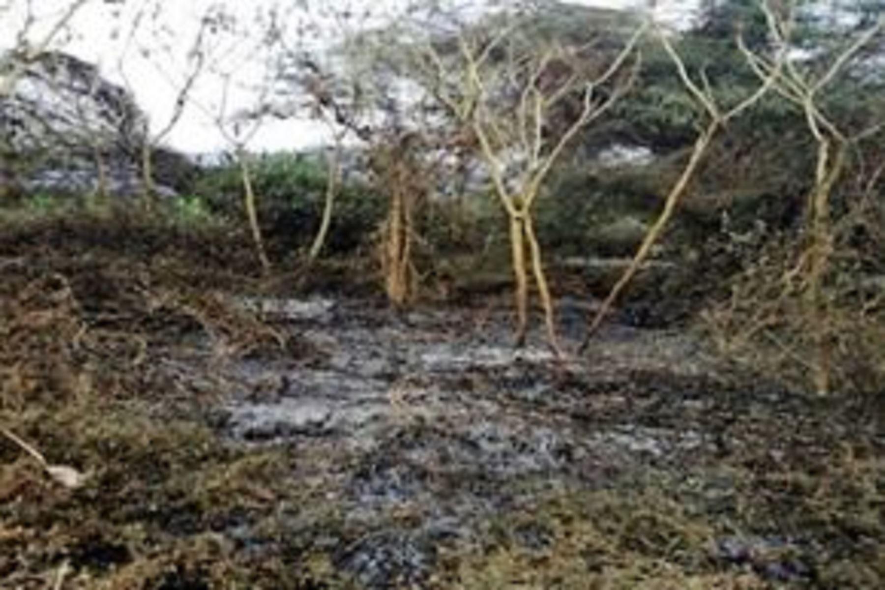 El fuego causó daños en dos hectáreas de cobertura natural.