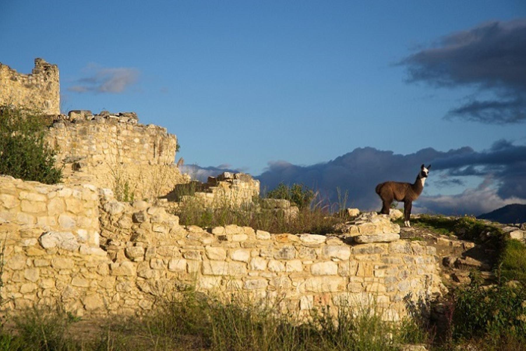 Ciudadela fortificada de Kuélap recibe reconocimiento como destino turístico para visitar, conocer y disfrutar este año. Foto: Promperú