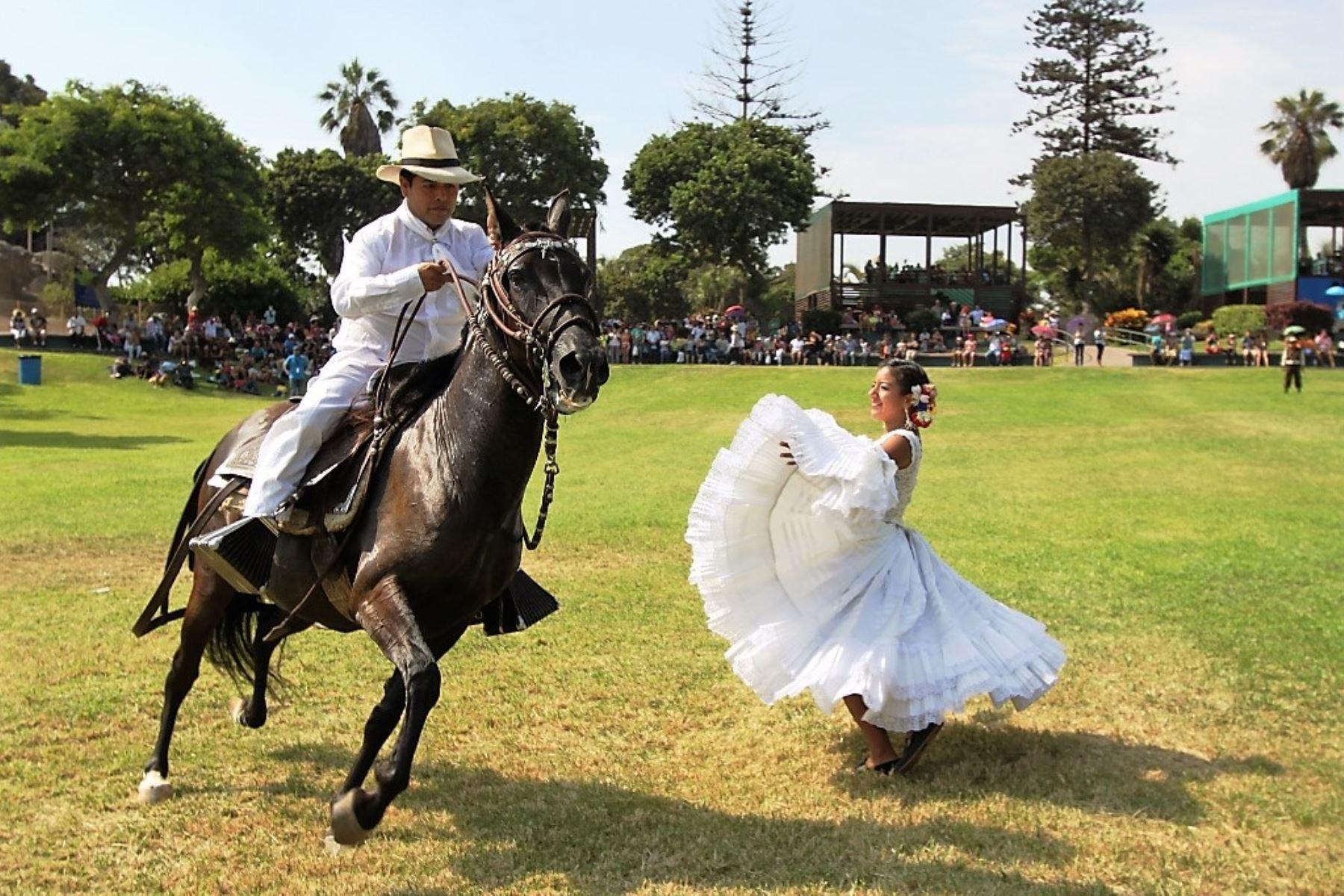 80 ejemplares del caballo peruano de paso competirán en concurso regional en Lambayeque. ANDINA/archivo