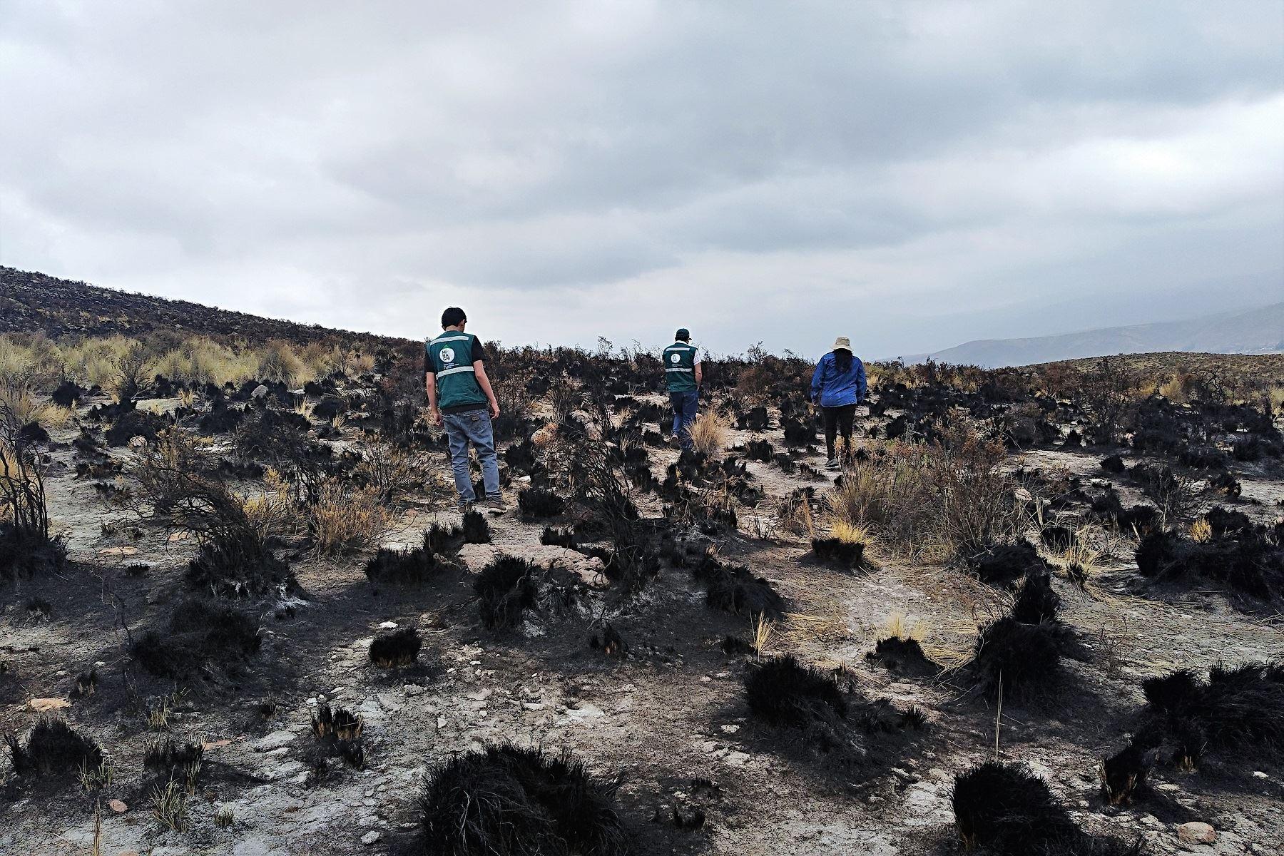 Incendio forestal en Arequipa afecta a 500 hectáreas de pastos naturales. ANDINA