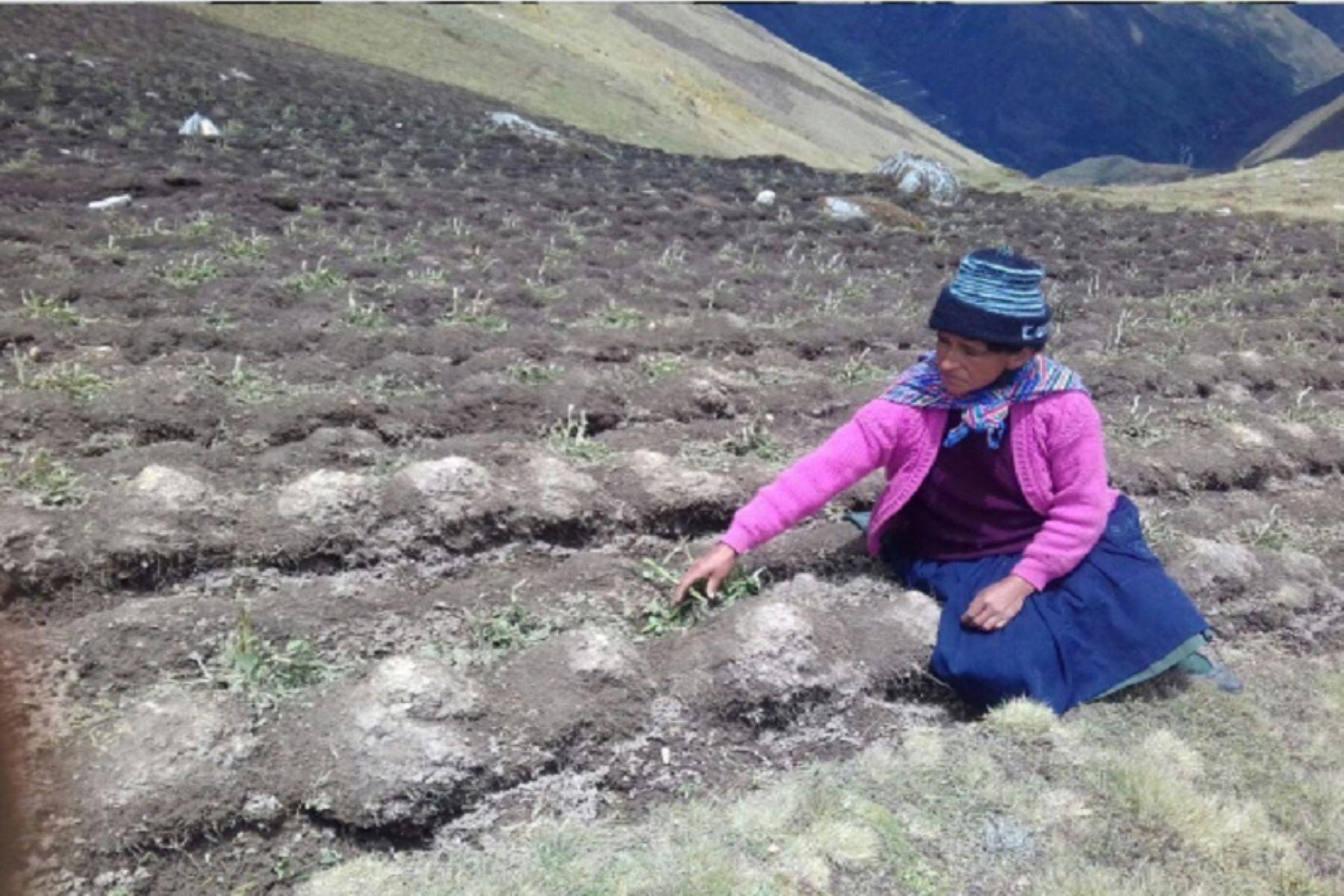 Pasco: granizada dañó cultivos, techos de cobertizos y viviendas