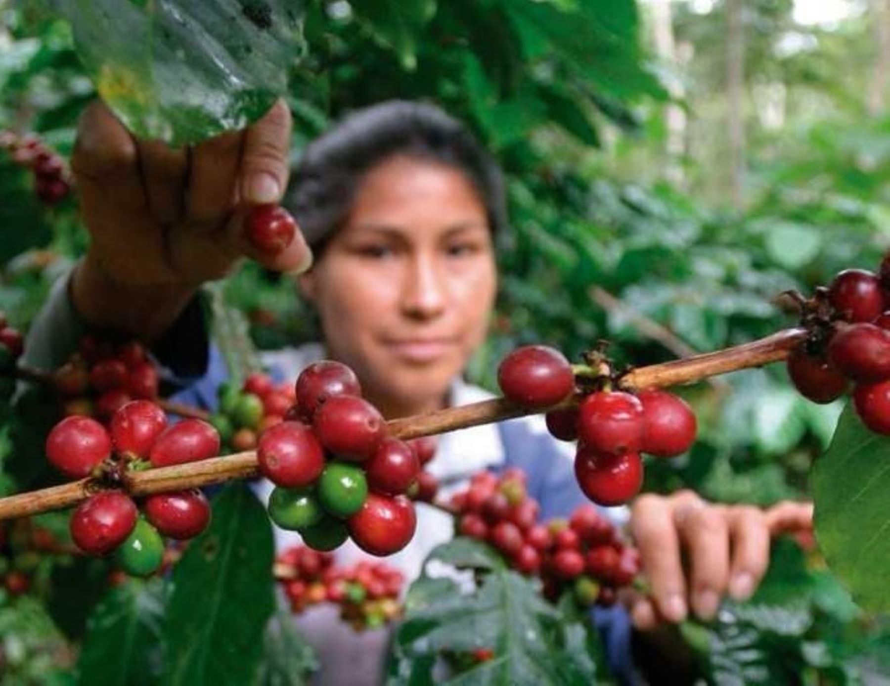 El Instituto Nacional de Innovación Agraria (INIA) fue autorizado como Centro Certificador de Competencias Laborales en Perfiles Ocupacionales de Café y Cacao, por el Ministerio de Trabajo y Promoción del Empleo (MTPE).