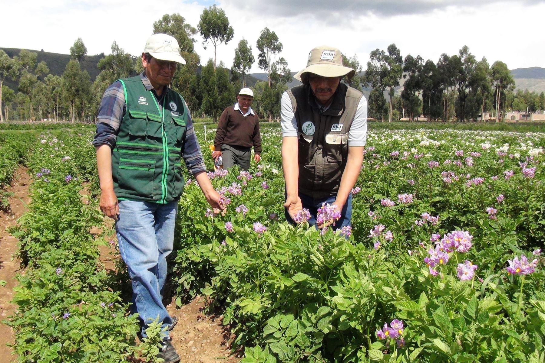 S/ 600 millones en innovación agraria. ANDINA/Pedro Tinoco