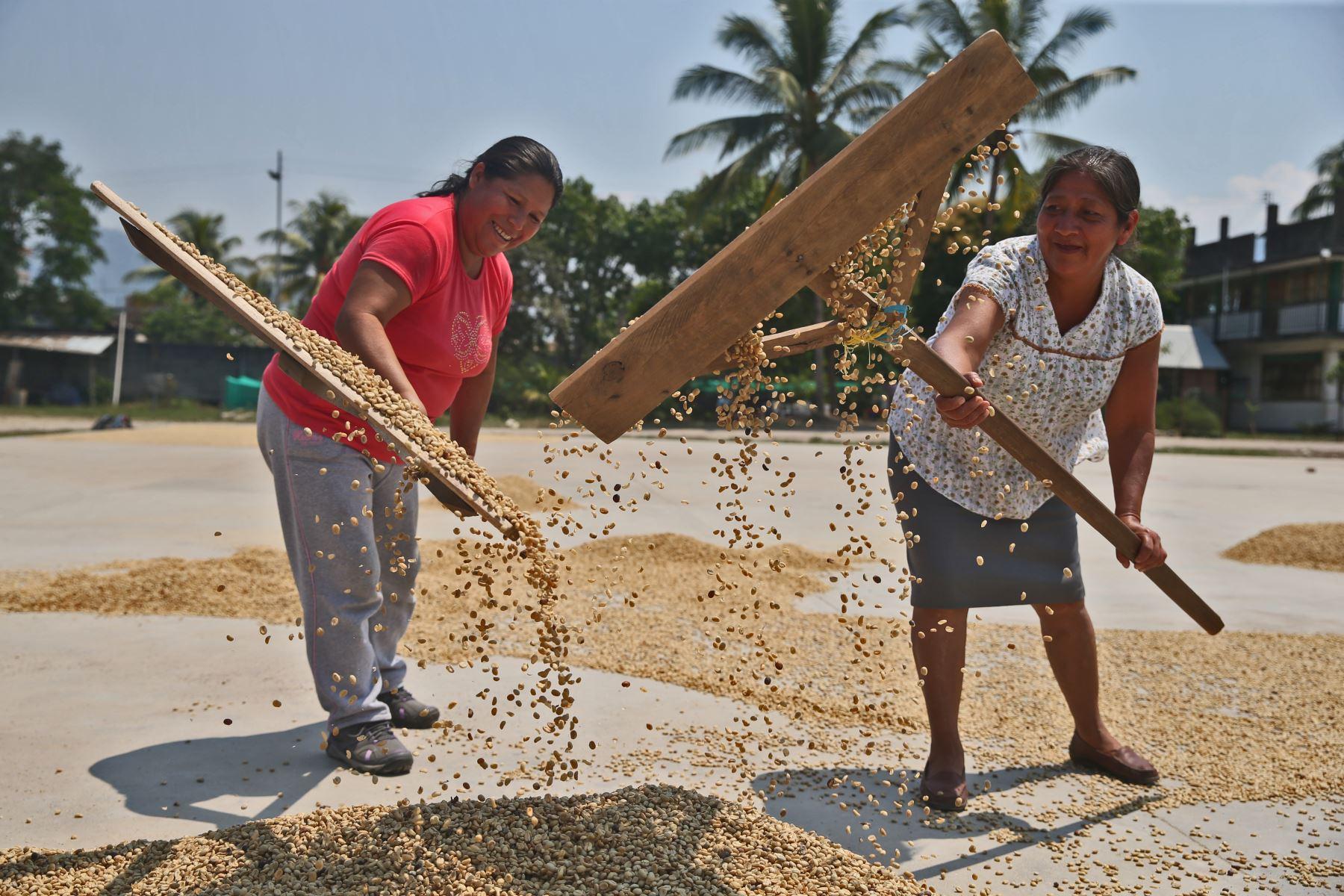 Foto: ANDINACajamarca se posiciona como principal región exportadora de café.