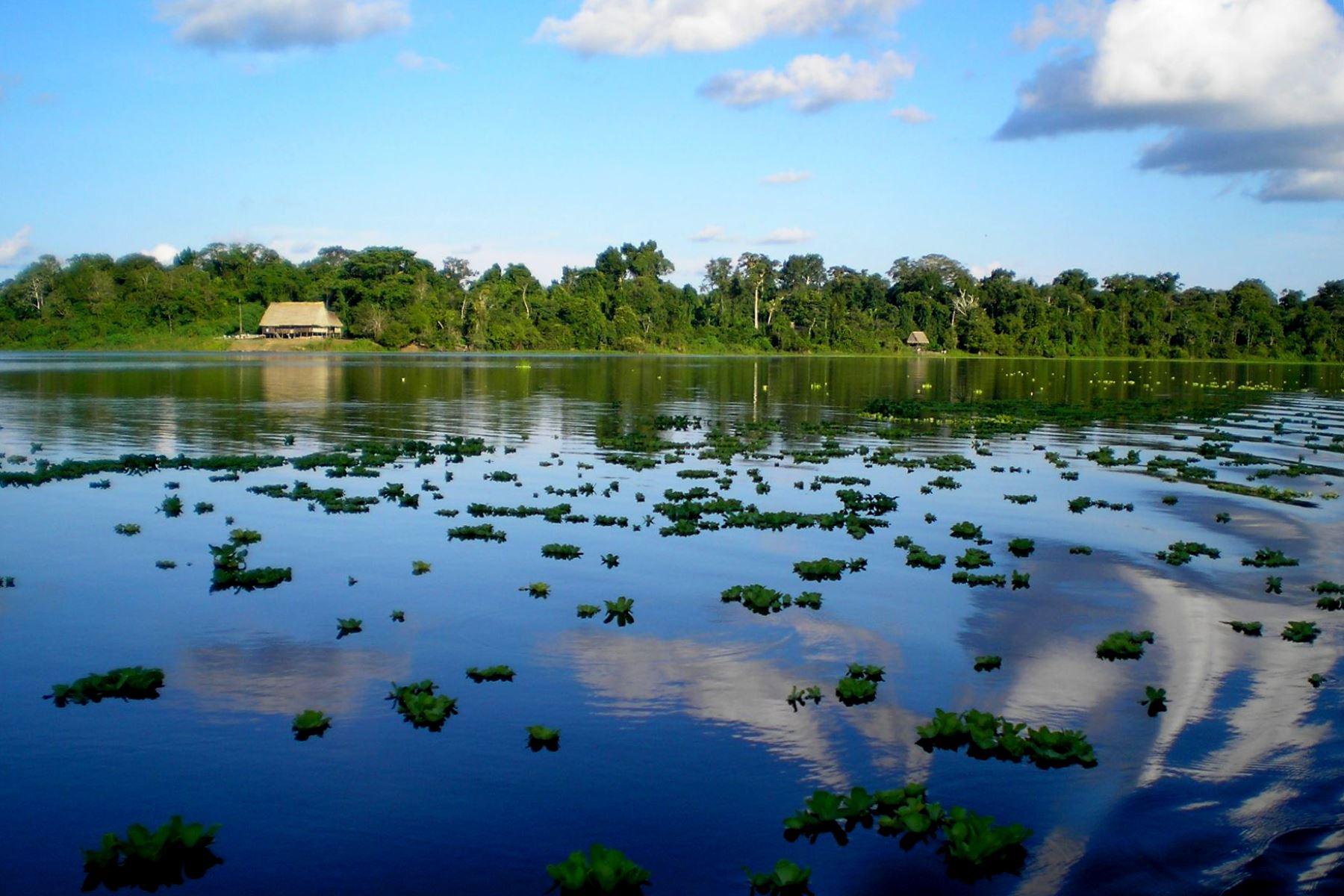 """La Reserva Nacional Pacaya Samiria, ubicada en la región Loreto, celebra 37 años de creación como paraíso amazónico que conserva una enorme biodiversidad, en muchos casos única en el planeta. Conocida también como la """"Selva de los espejos"""", esta área natural protegida recibió 14,202 visitantes en 2018. ANDINA/Difusión"""