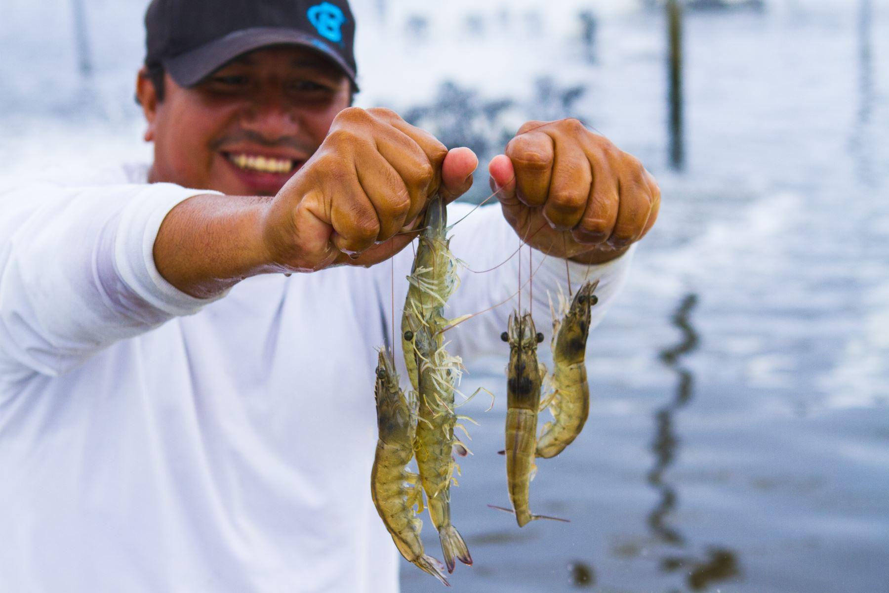 Actividad de acuicultura. ANDINA/Difusión