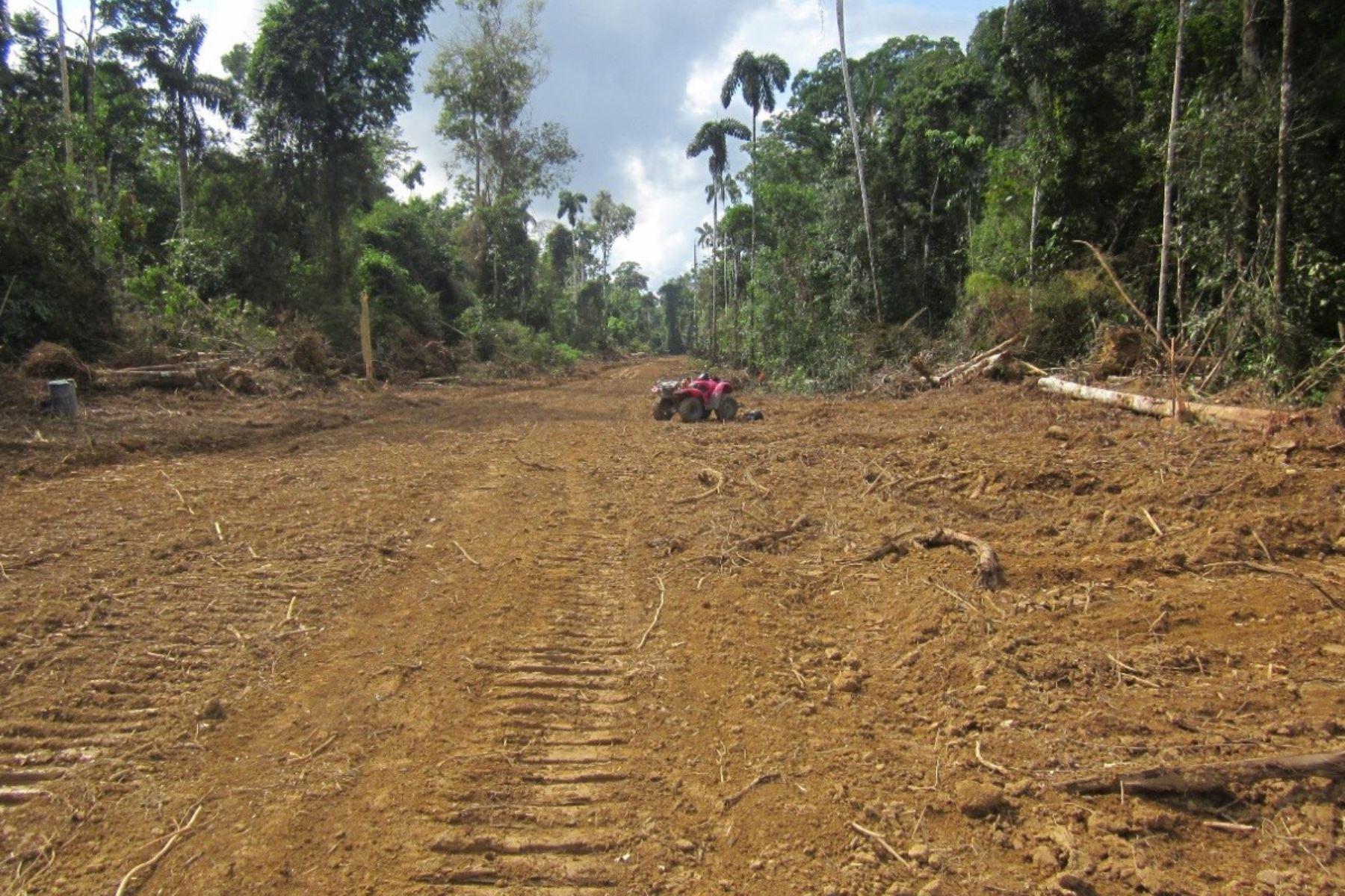 Gobierno no permitirá construcción de carreteras en parques nacionales y reservas indígenas. ANDINA/archivo
