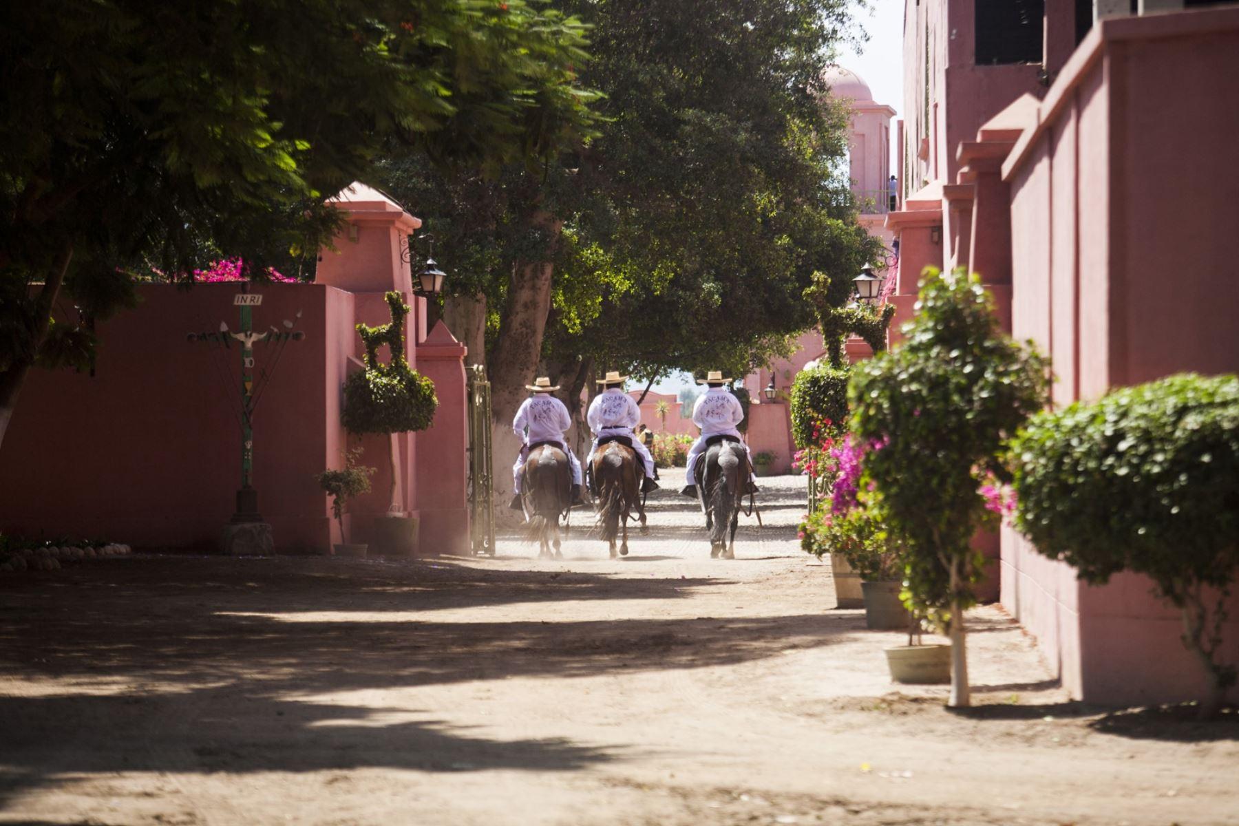 Como para afianzar nuestra identidad peruana, los anfitriones ofrecen a los afortunados visitantes un espectáculo de caballos peruano de paso al ritmo de la marinera norteña. Foto: Promperú/Daniel Silva