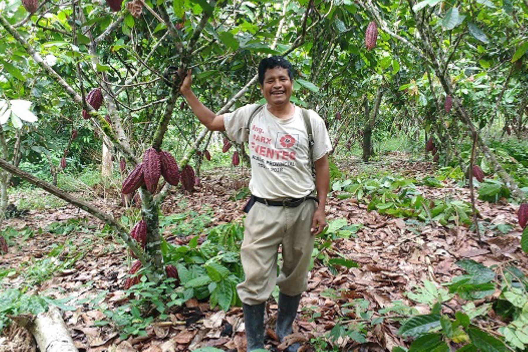 Productores de cacao de Huánuco exportaron 2,000 toneladas de cacao orgánico a Europa. ANDINA/Difusión