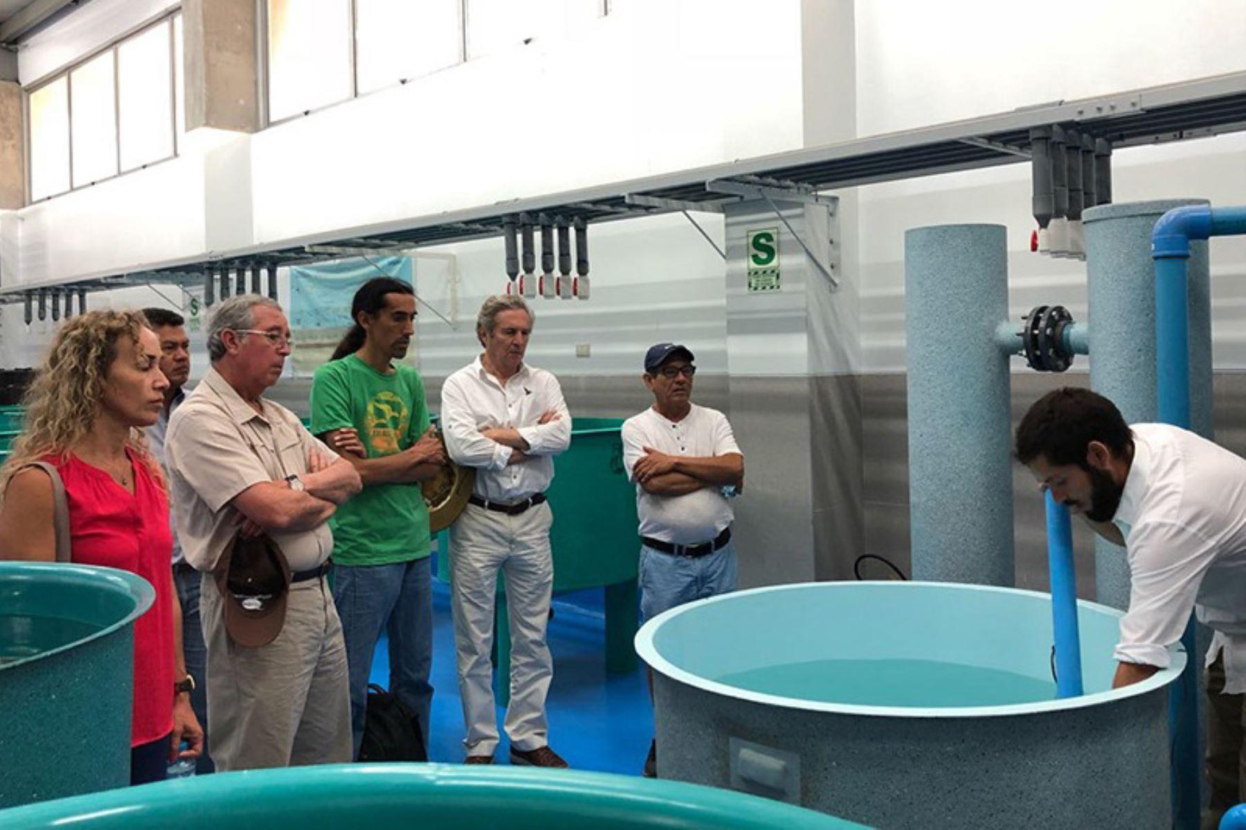 Resaltan aporte de la CITE acuícola de Talara en desarrollo de sector. ANDINA/Difusión