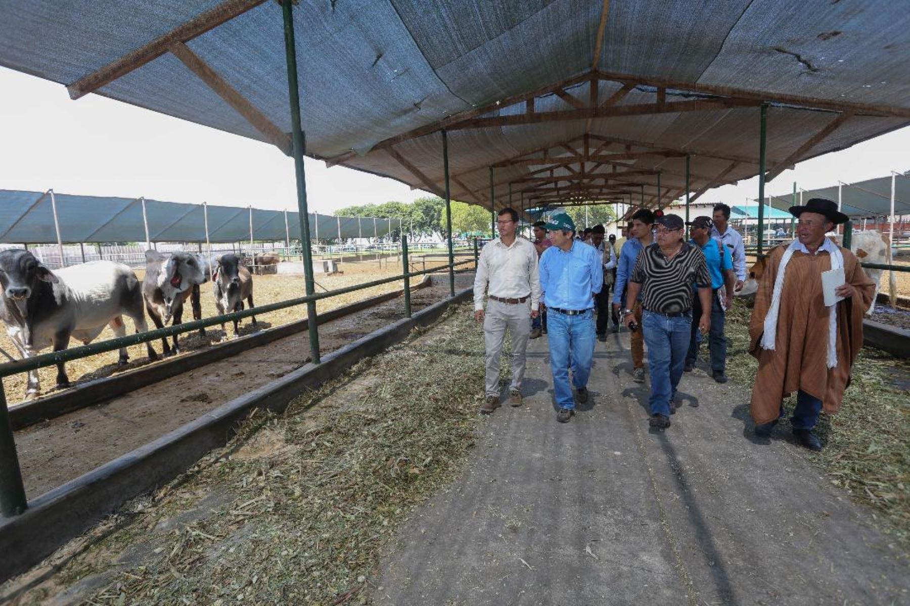 Ministro de Agricultura y Riego, José Arista inspecciona mejoramiento de ganado. Foto: Cortesía Minagri.