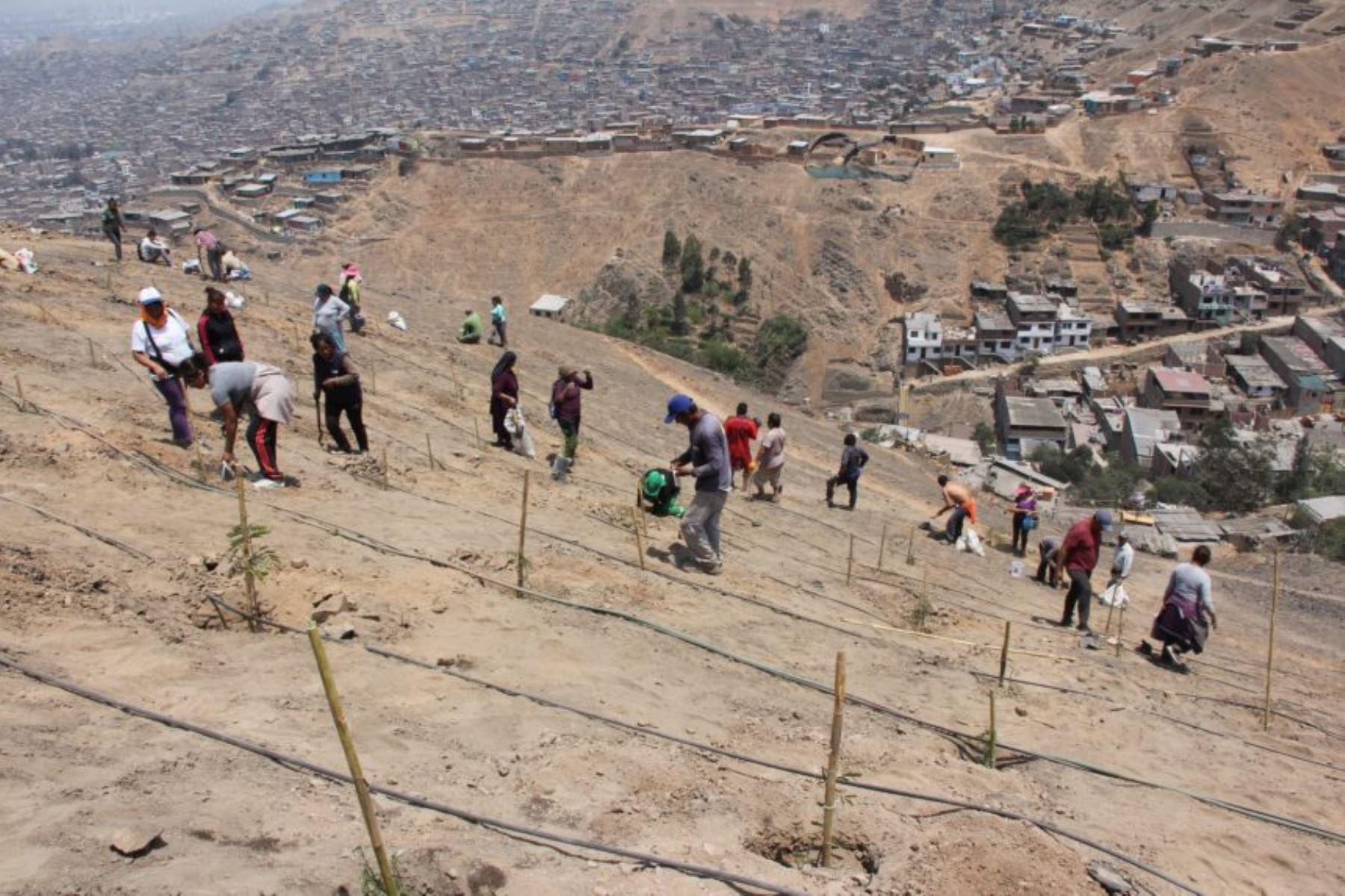 Pobladores y personal calificado trabajaron durante meses para lograr reforestar esta zona.