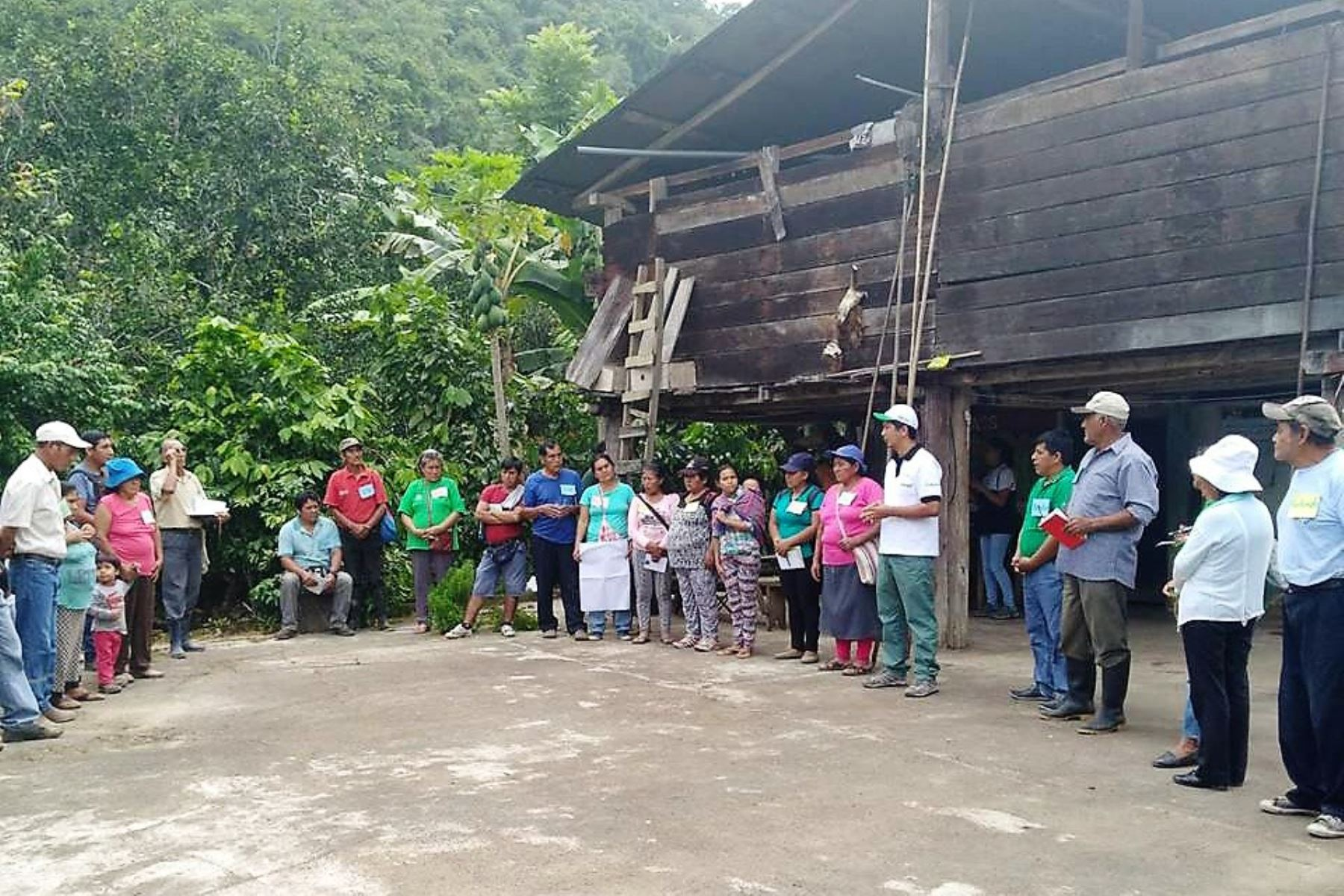 Más de 400 familias de Satipo se benefician con producción de cacao orgánico. ANDINA/Difusión