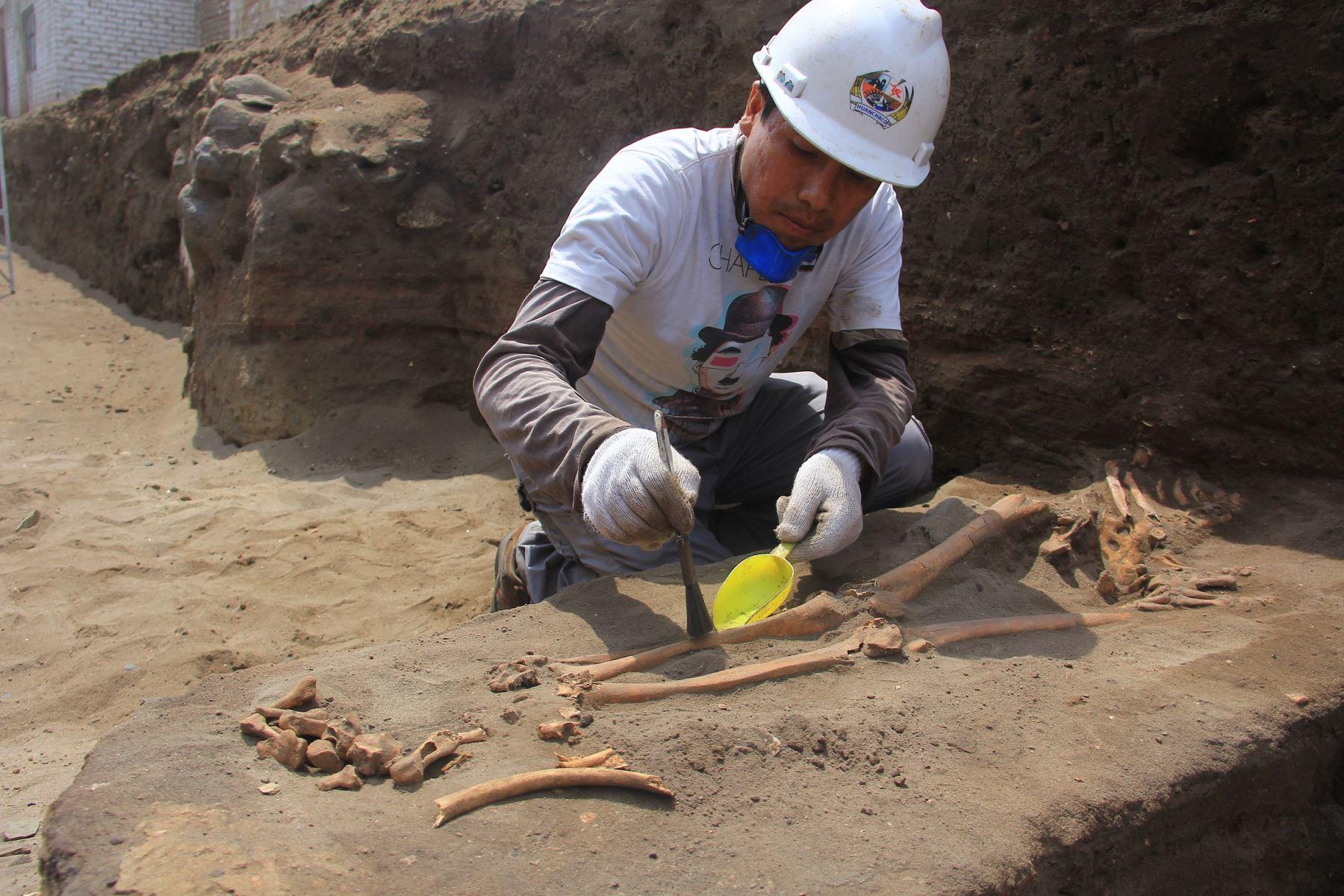 Hallan 47 entierros de más de 2,500 años, cerámicos, spondylus y otros objetos en Huanchaco, Trujillo. ANDINA/Luis Puell