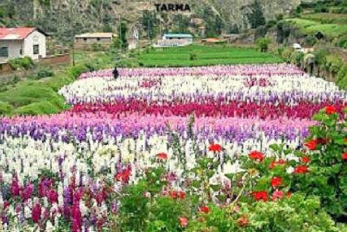 Los espléndidos colores que identifican al Perú no solo se encuentran en sus tejidos, montañas, aves y mariposas, sino también en sus hermosas flores engalanan el paisaje nacional y cuya variedad y amplia gama cromática confirma por qué somos uno de los países más biodiversos del planeta. ANDINA/Difusión