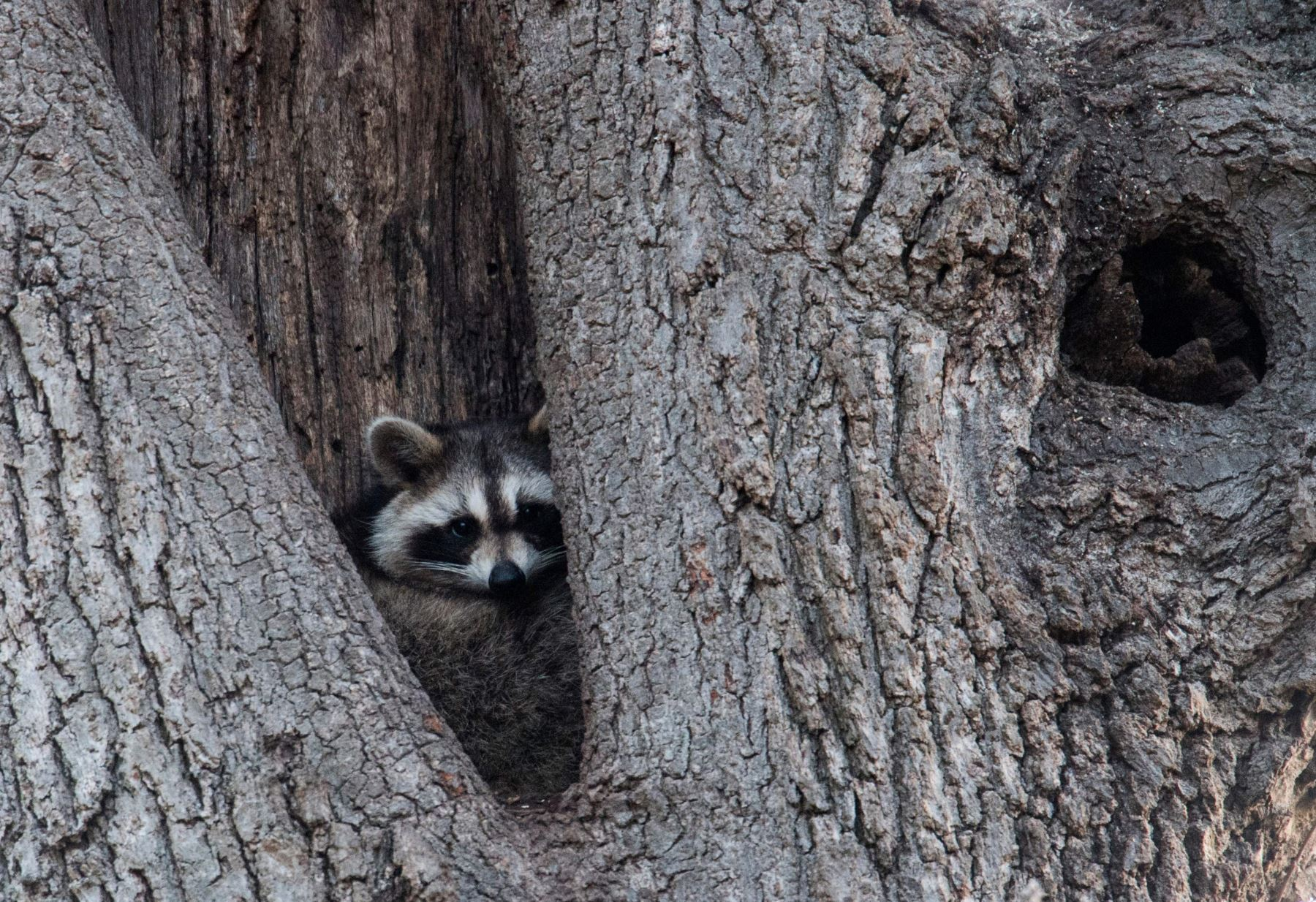 Vida silvestre en Nueva York. Foto: AFP