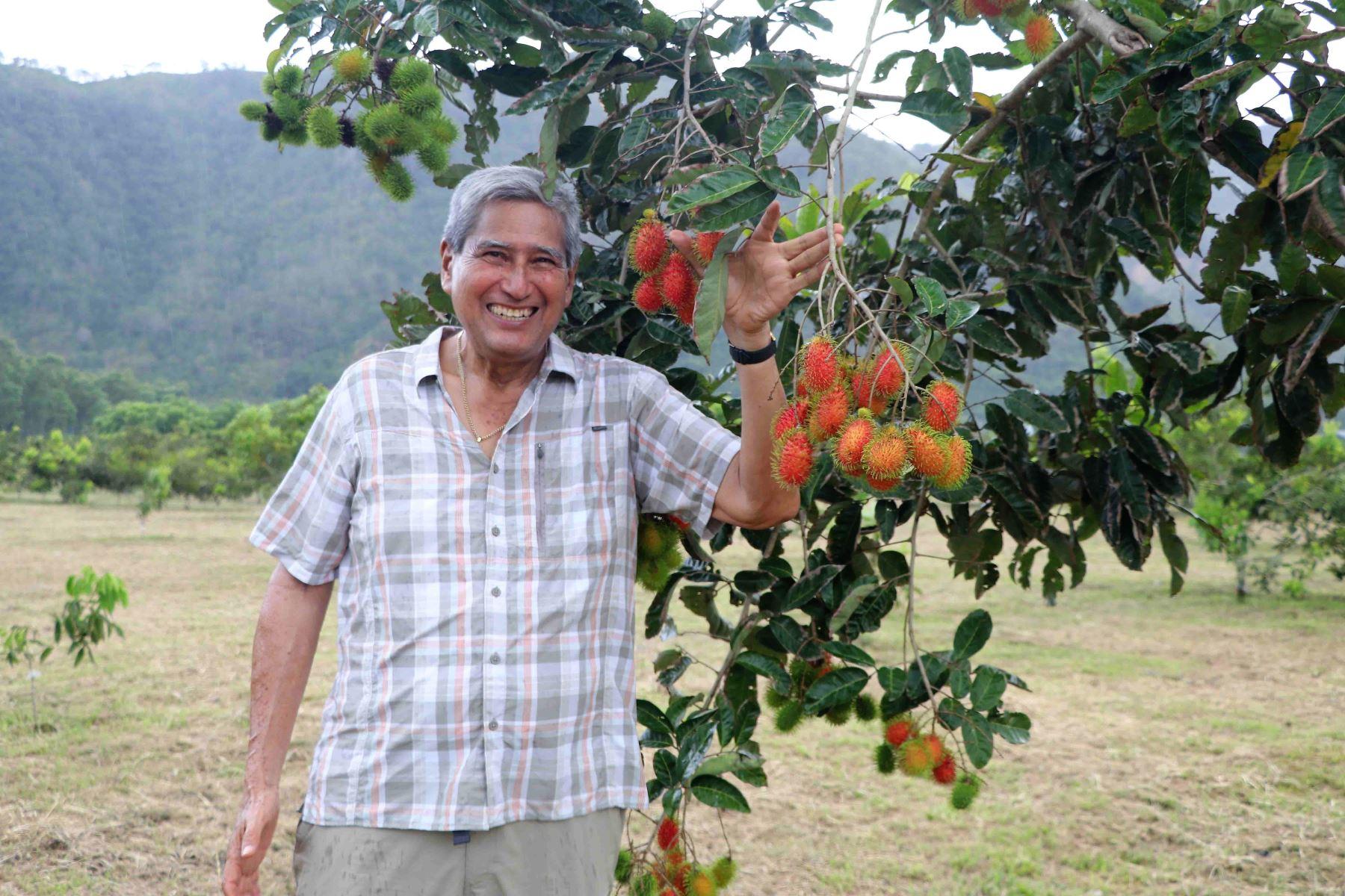 El investigador Hugo Villachica busca introducir el cultivo de rambután, la fruta que aspira en convertirse en sensación en Satipo. ANDINA