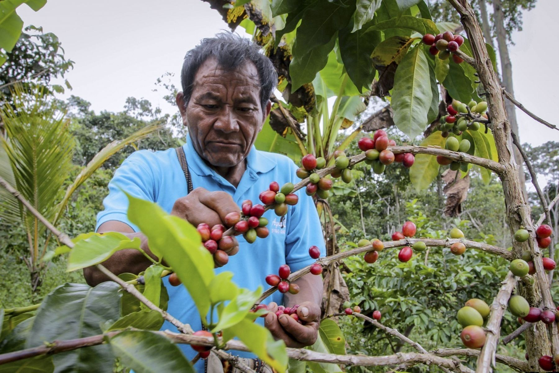 Agroexportaciones. ANDINA/Difusión