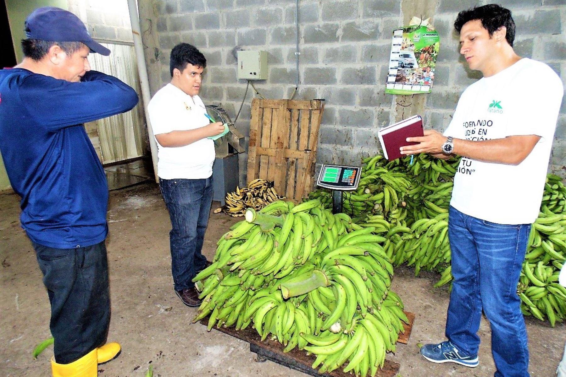 San Martín potencia la producción de plátano para llegar a más mercados. ANDINA/Difusión