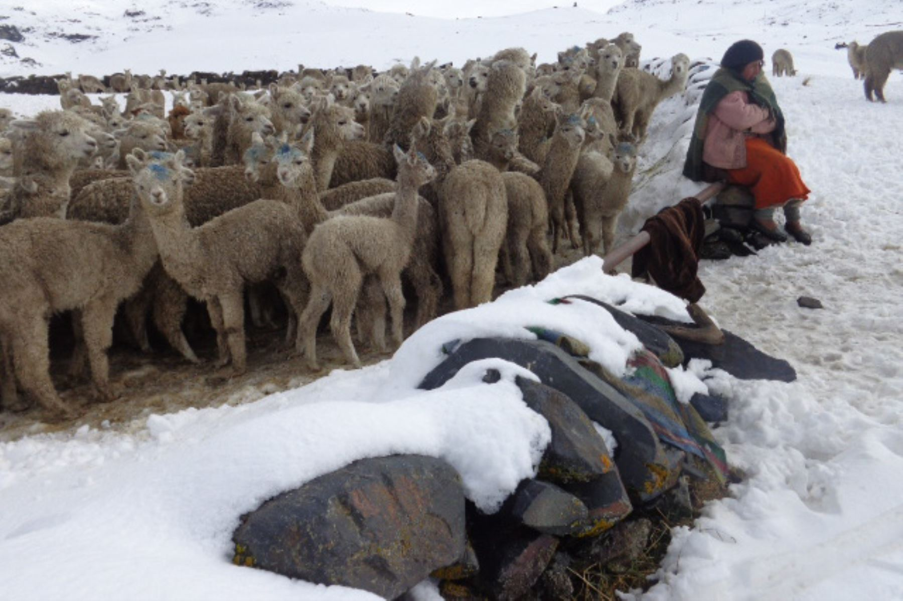 El número de animales perdidos se elevó a 4,799 en 11 regiones.Foto: ANDINA/Difusión.