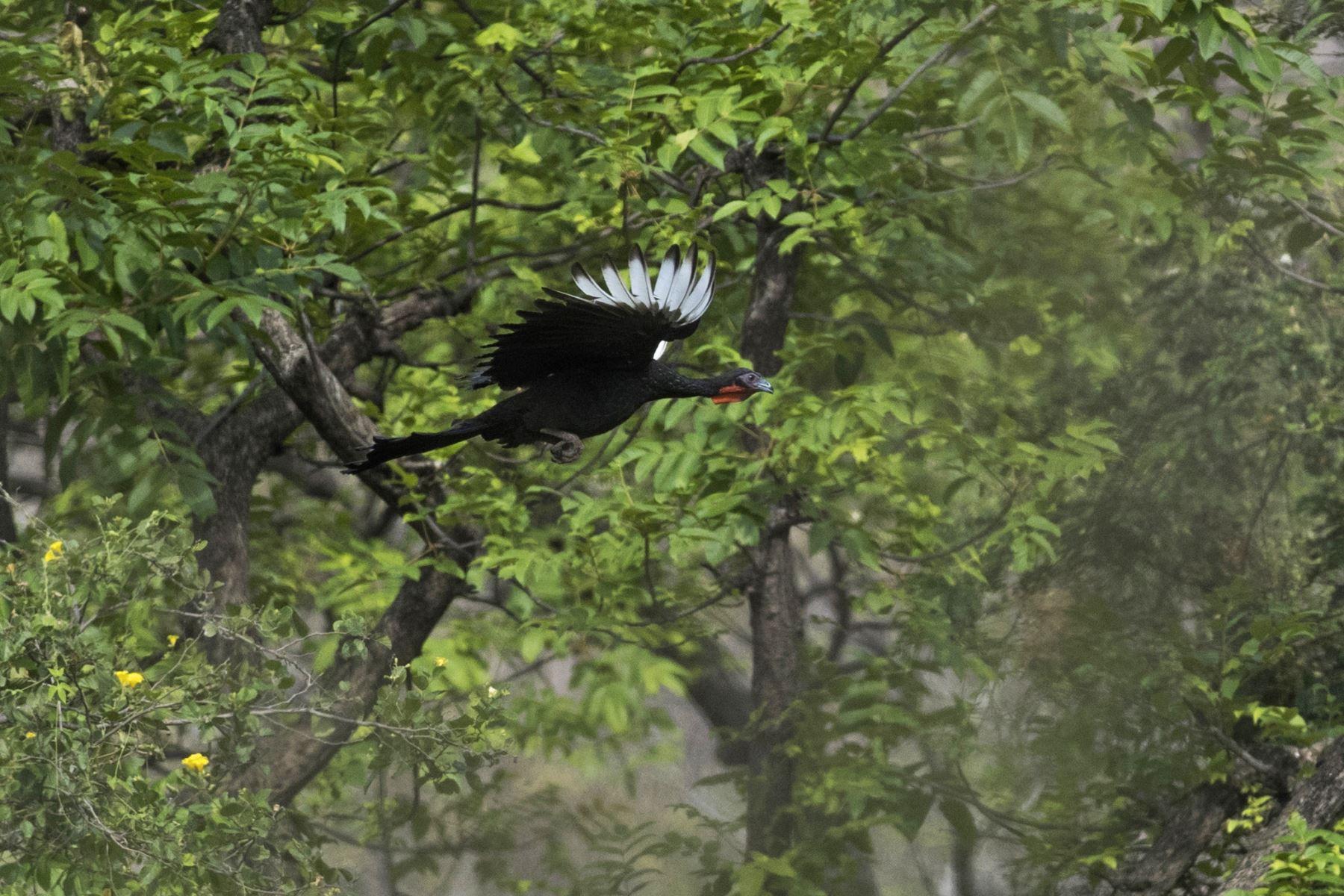 Chaparrí: la reserva que protege a la pava aliblanca y al oso de anteojos. ANDINA/Carlos Lezama
