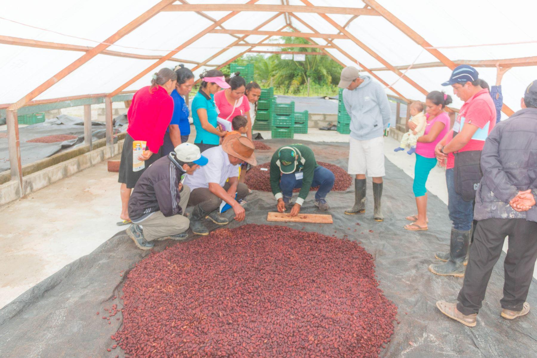 Cacao de San Martín tiene gran demanda en Australia, Italia y Suiza. ANDINA/Difusión