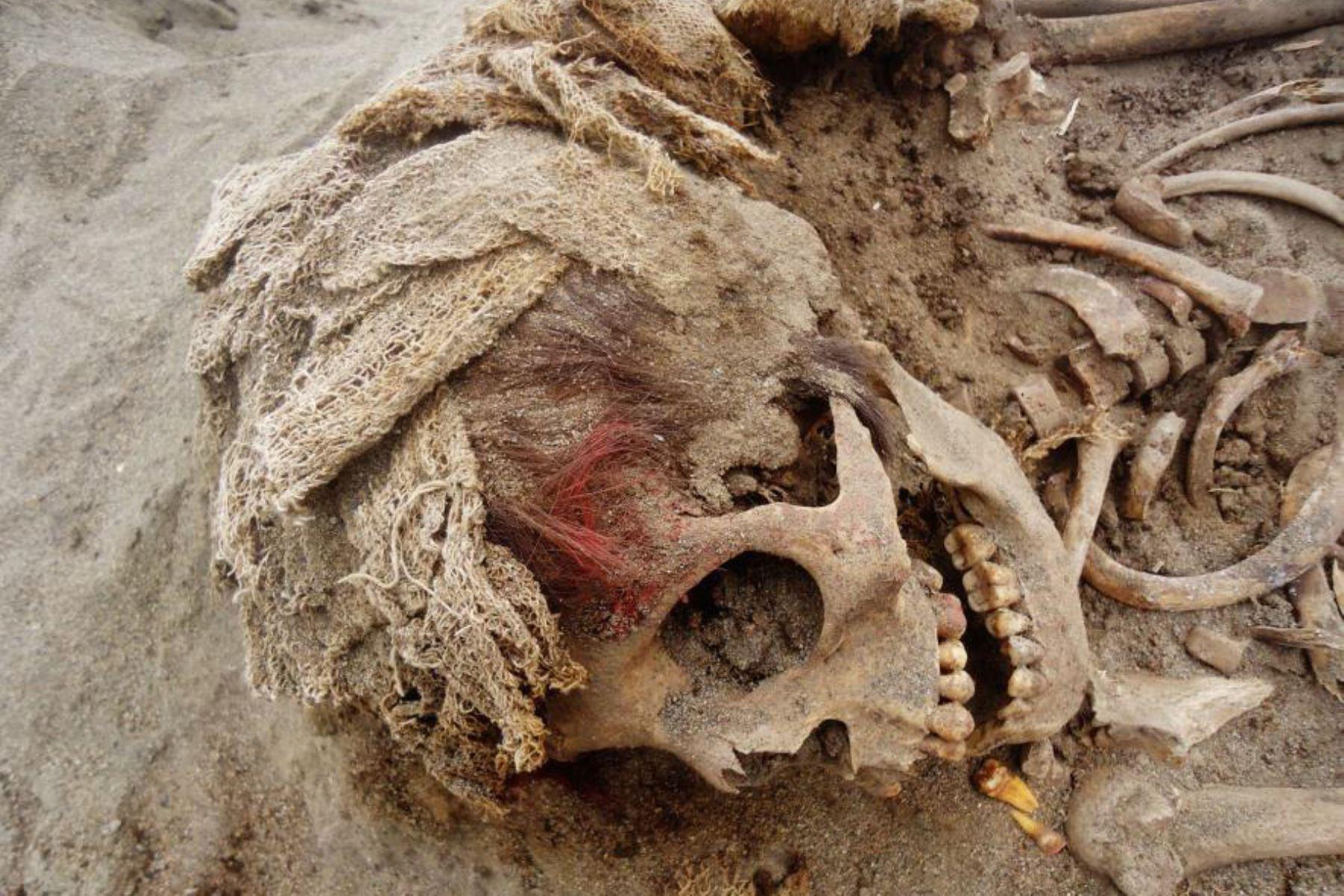 Trujillo: aumenta a 269 los restos óseos de niños sacrificados hace 550 años. Foto: Gabriel Prieto