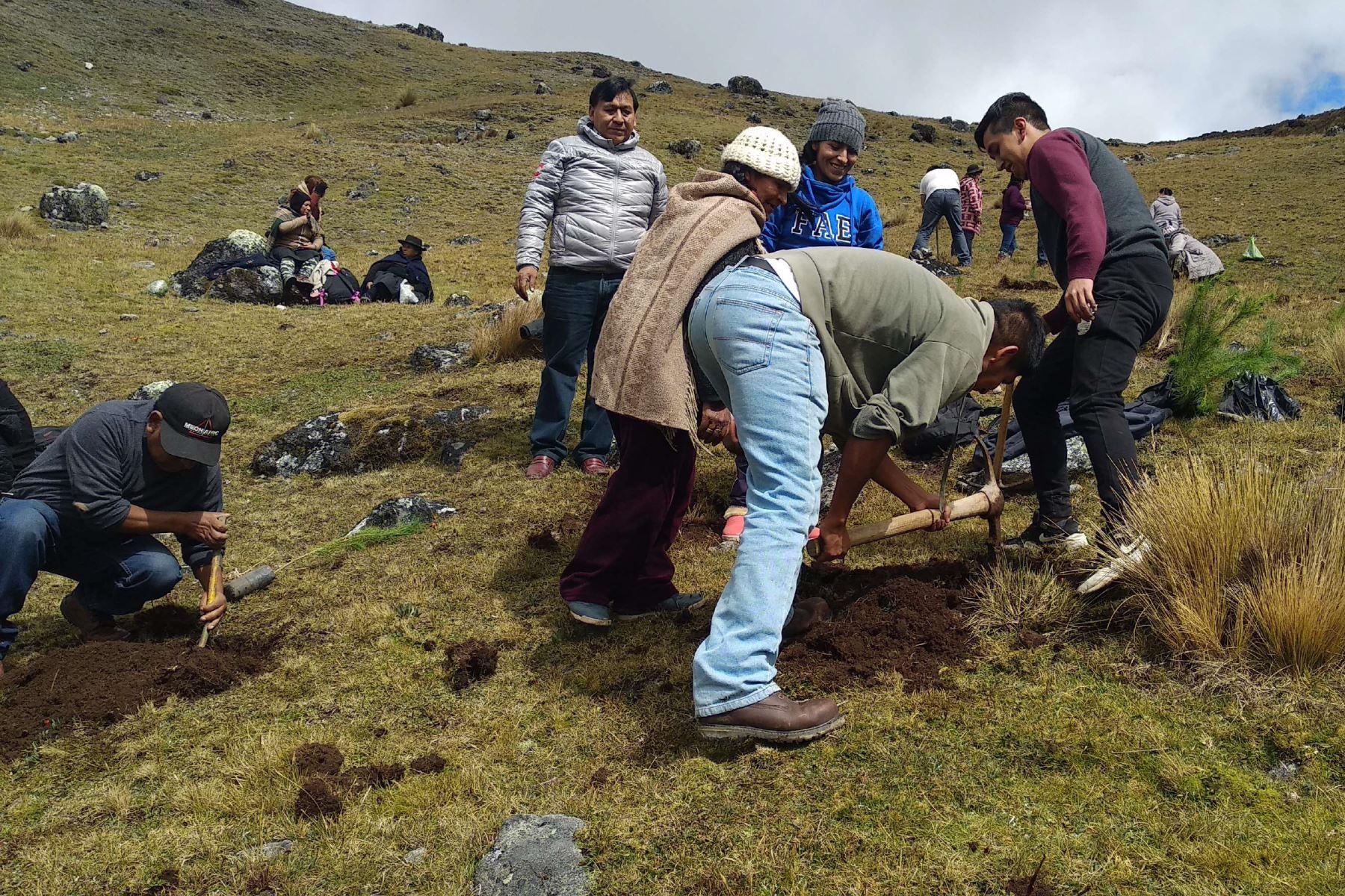 Siembran 500 plantones en Área de Conservación Regional Huaytapallana. ANDINA/Pedro Tinoco