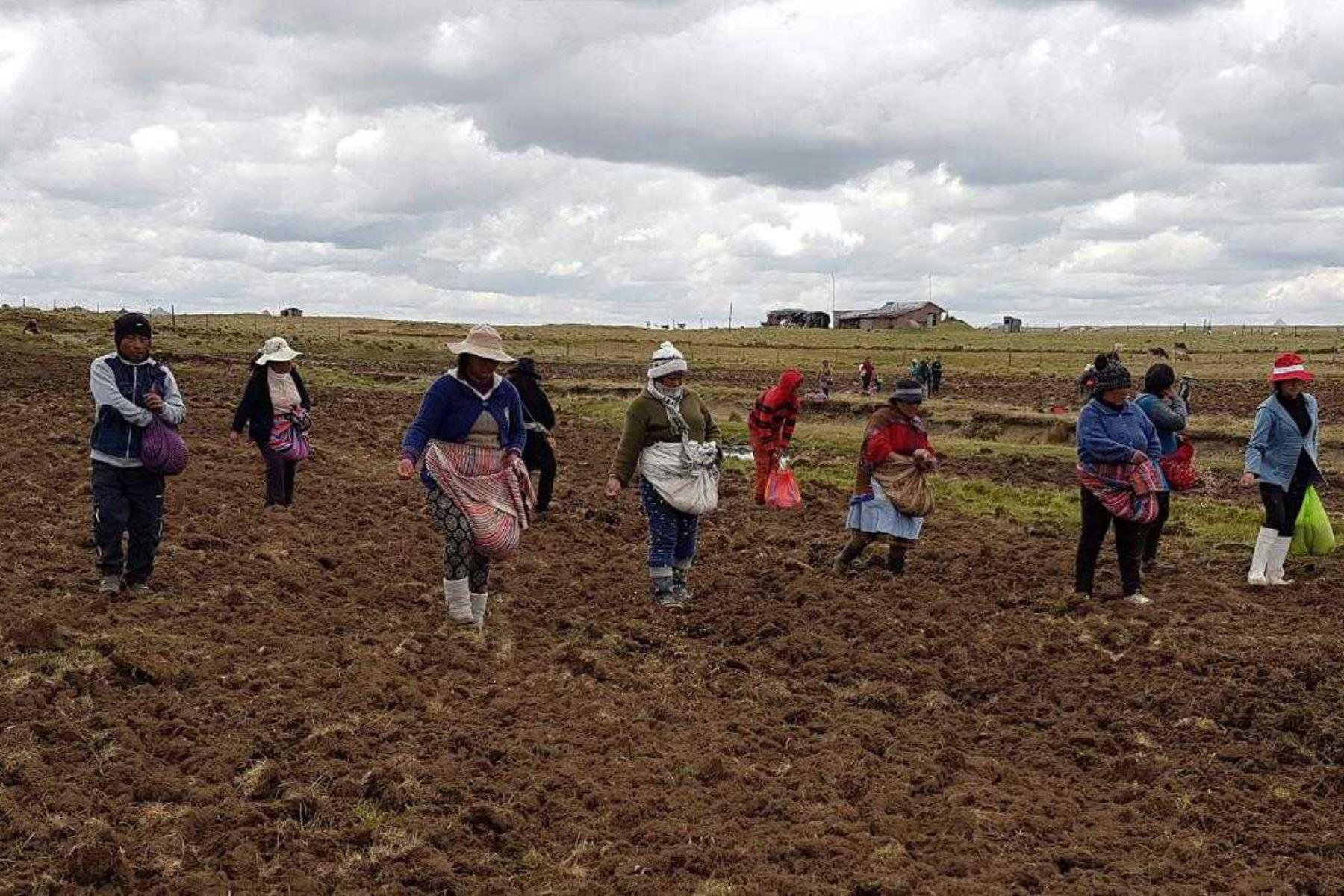 Pequeños agricultores. ANDINA/Difusión
