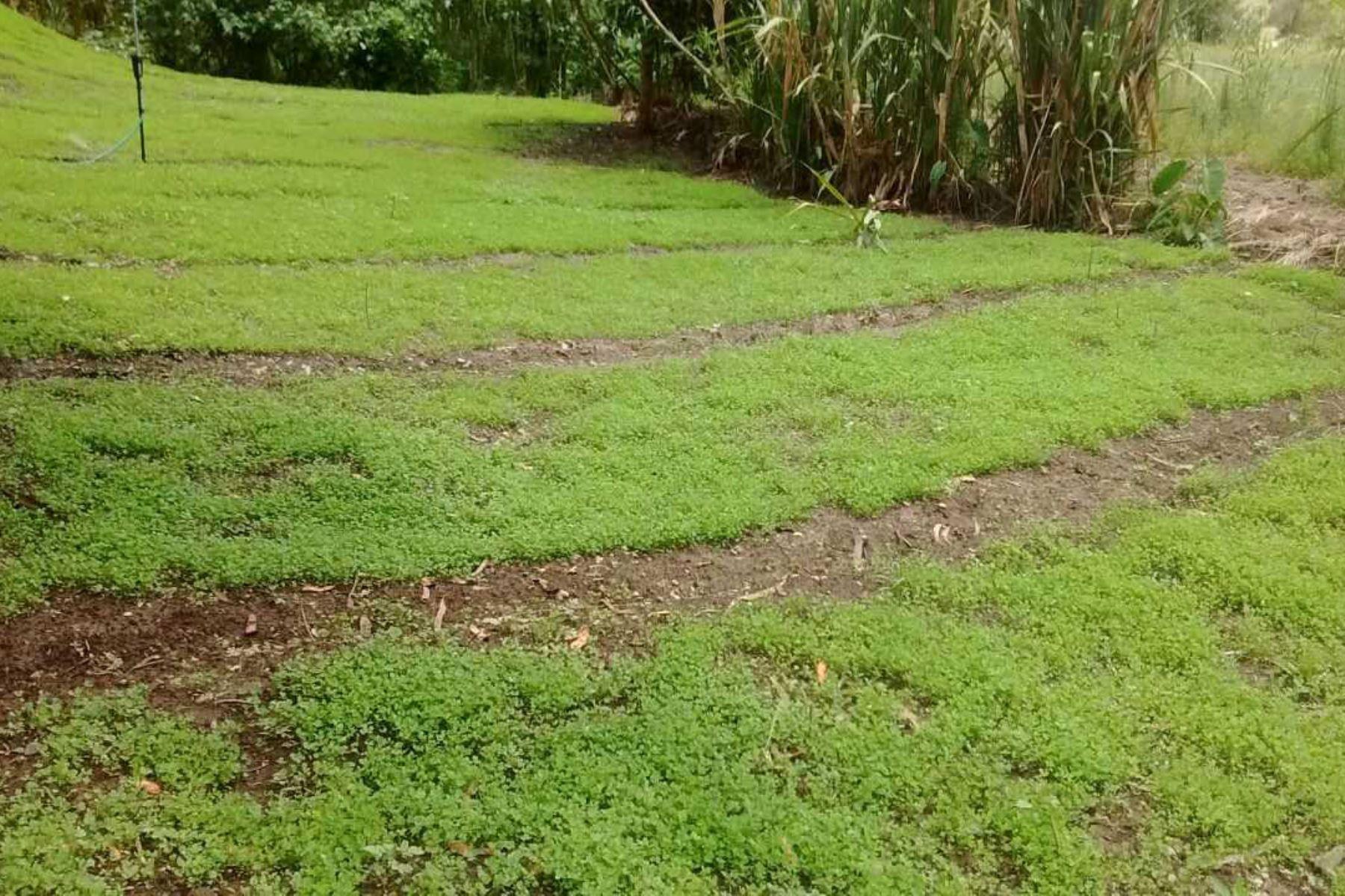 Agricultura. ANDINA/Difusión
